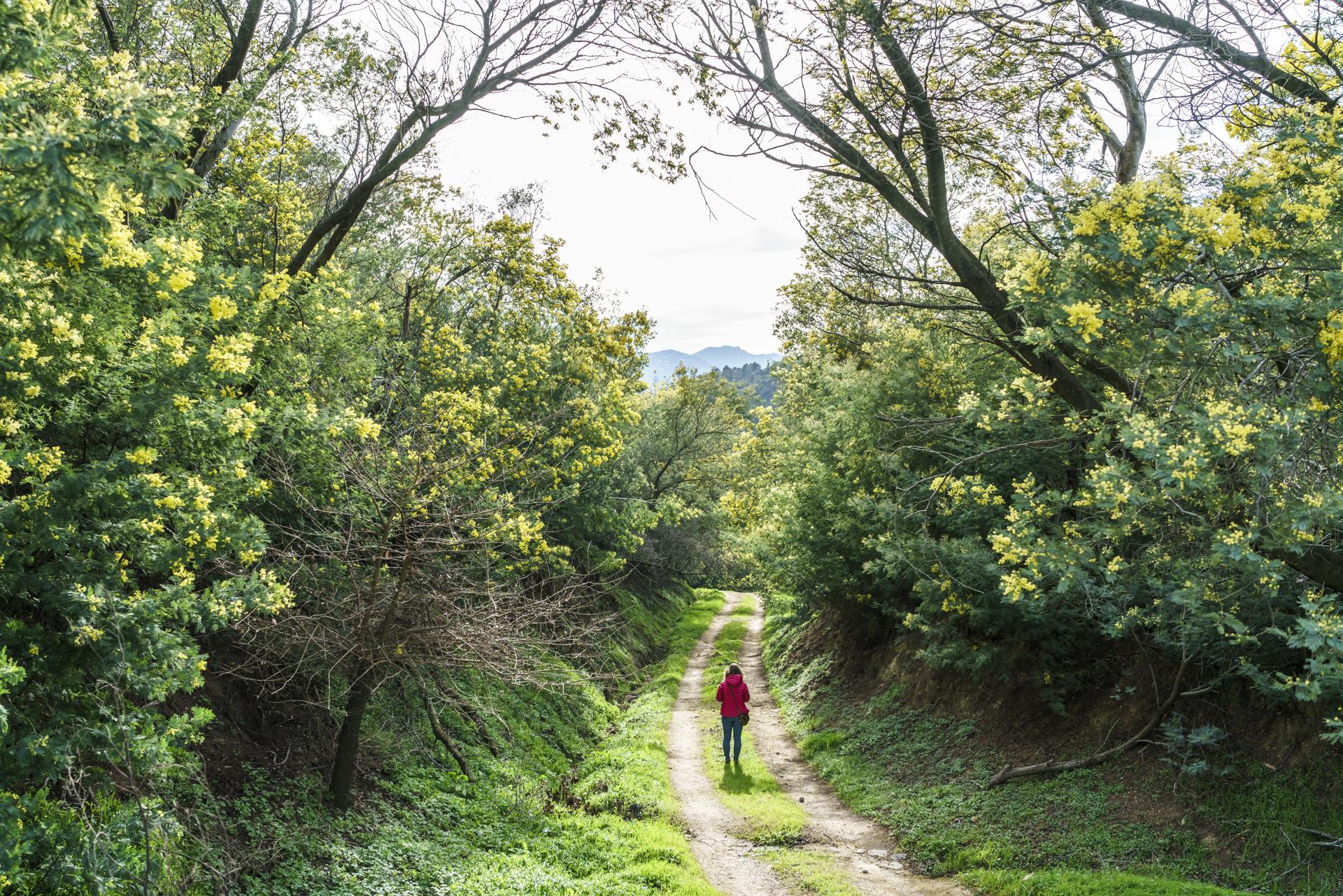 Tanneron Route du Mimosa