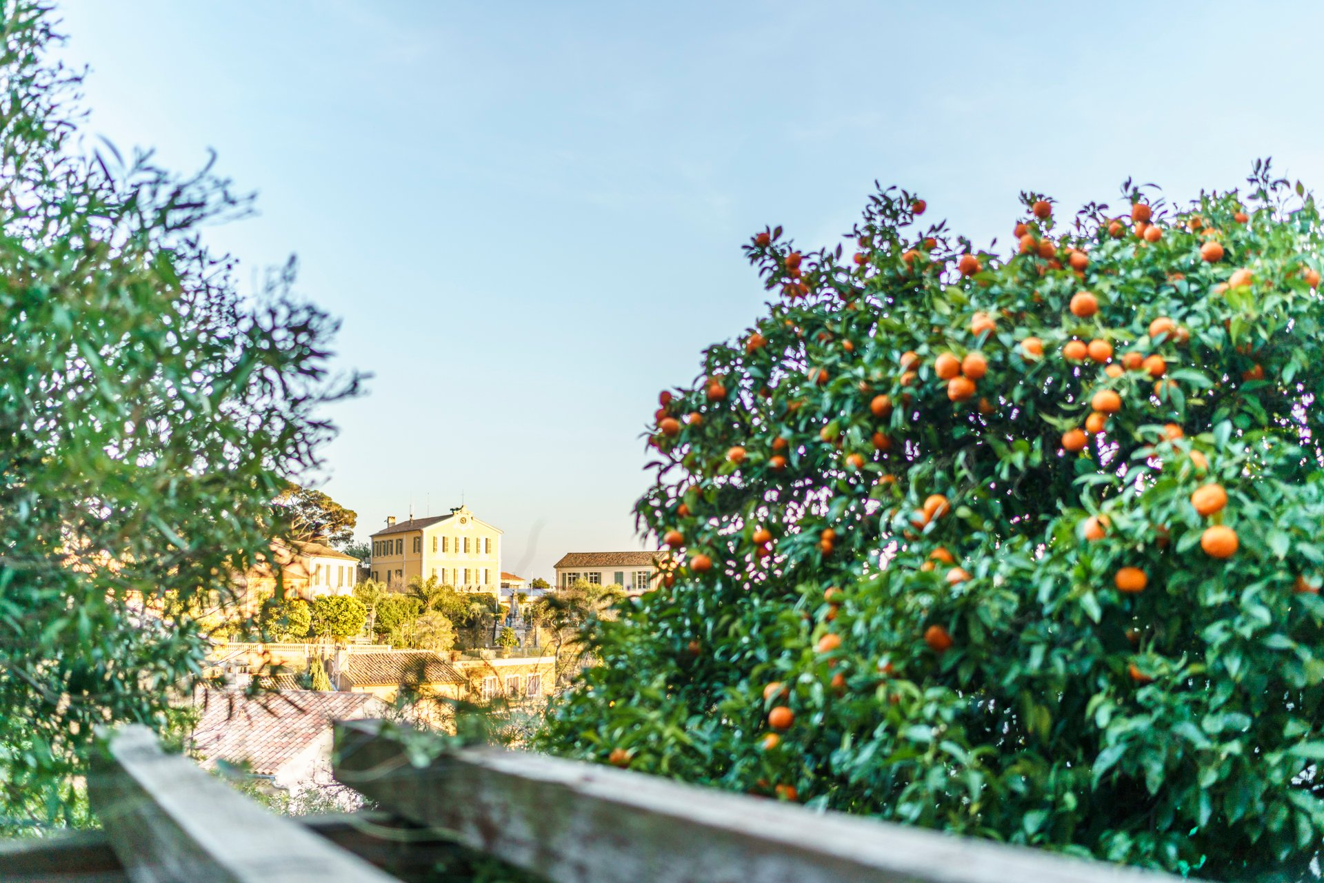 Mandarinenbaum in Bormes-les-Mimosas