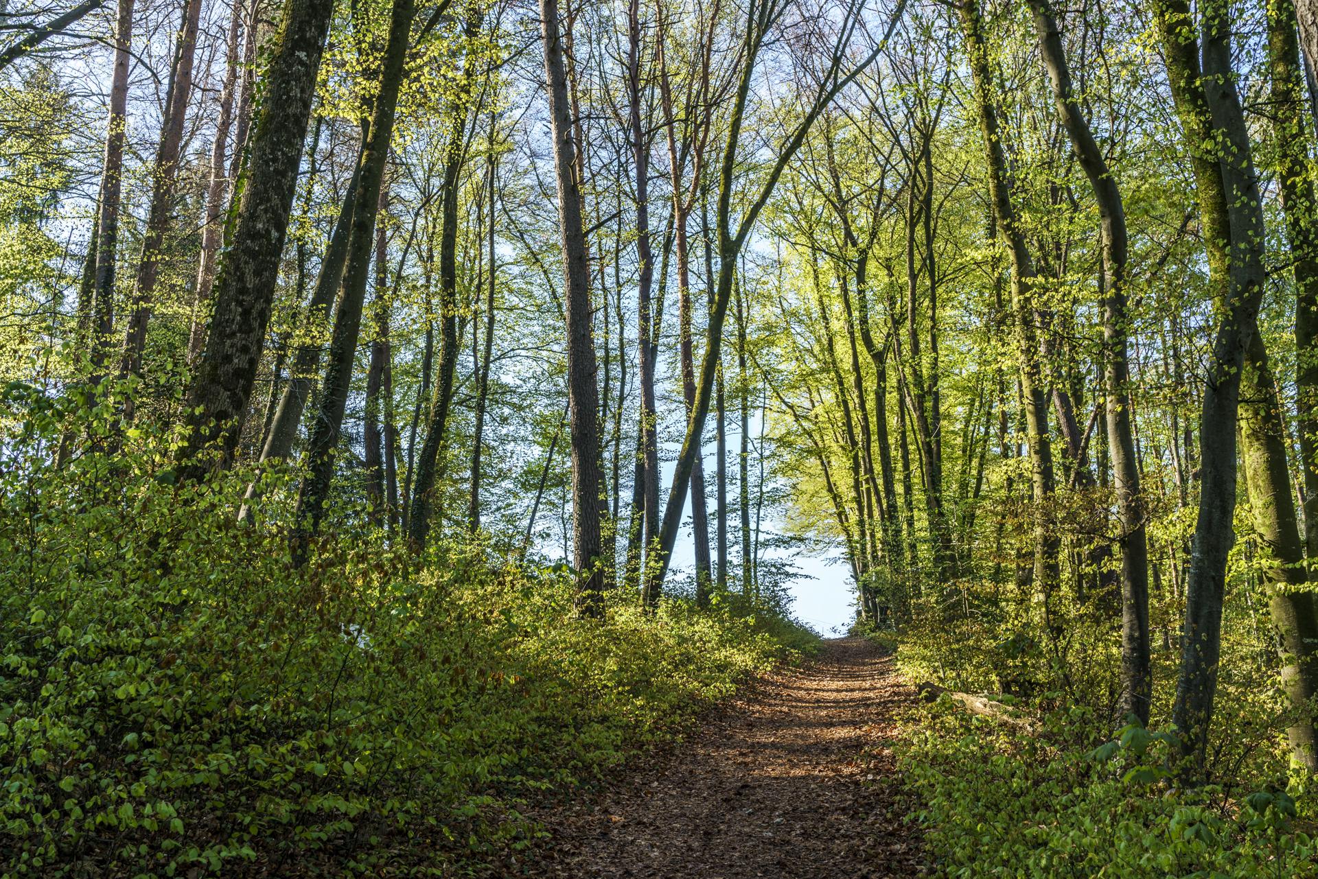 Bubendorf Murenberg Wald