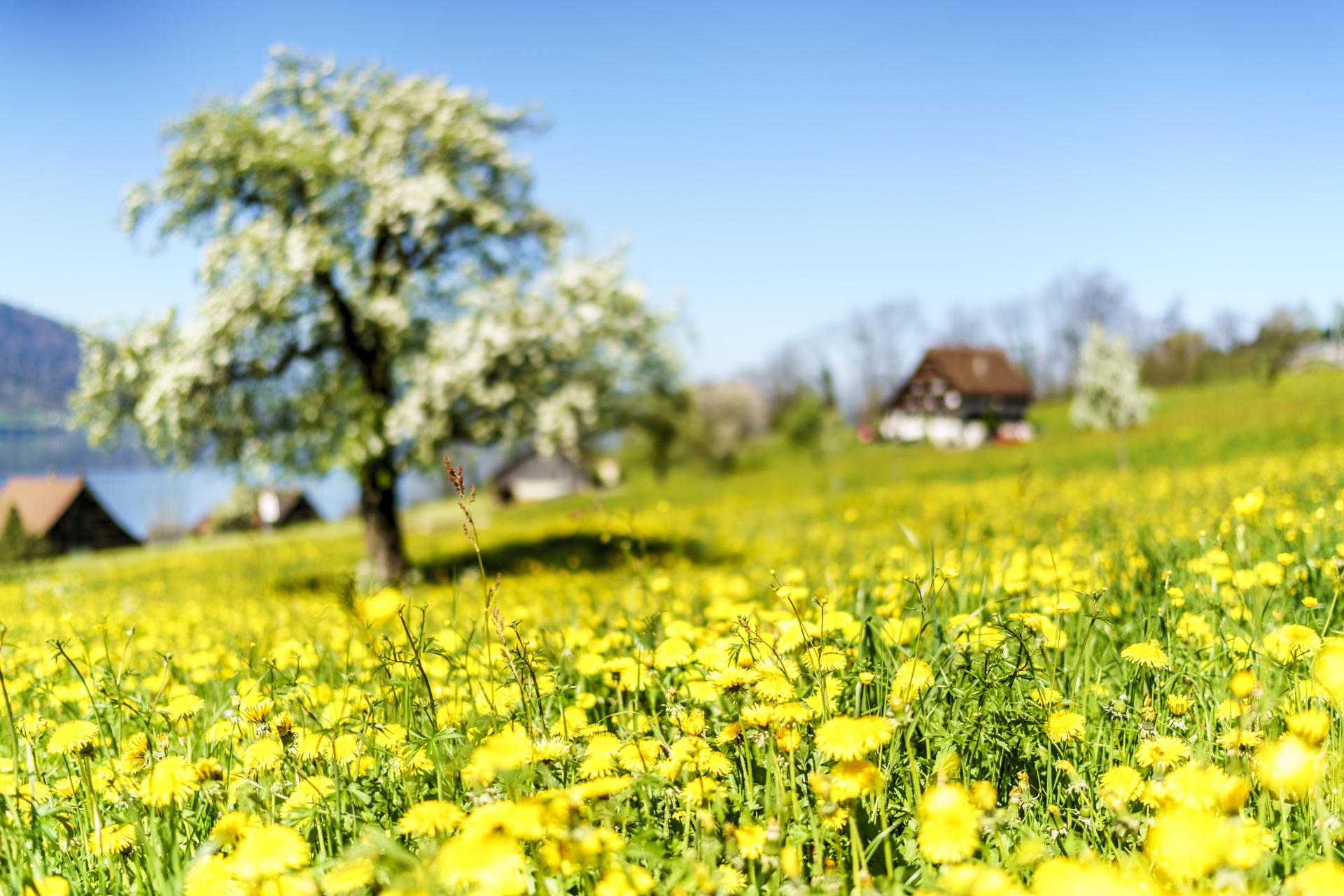 Frühling Arth-Goldau