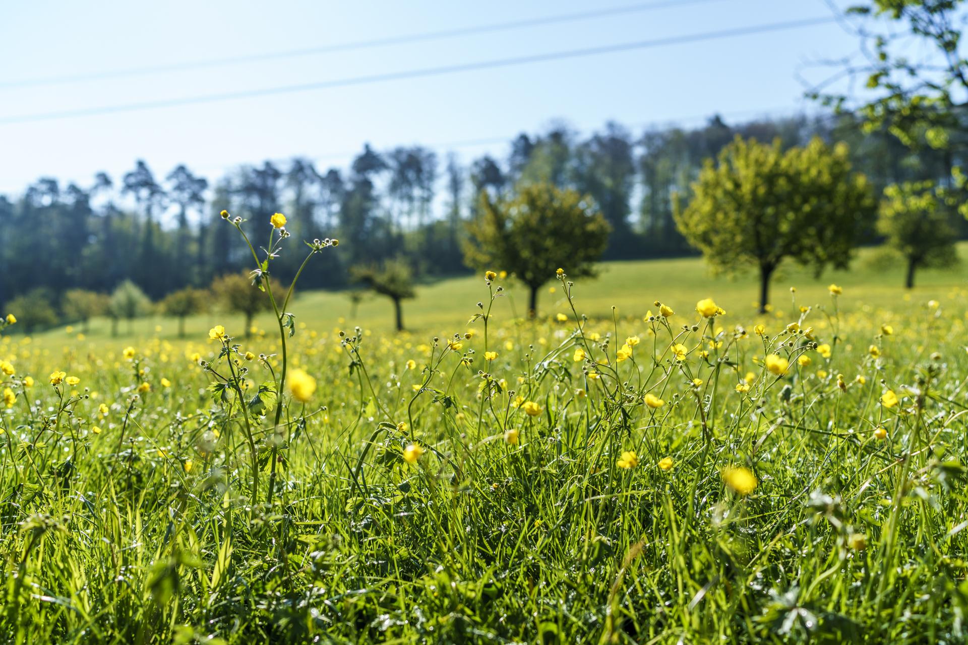 Murenberg Frühling