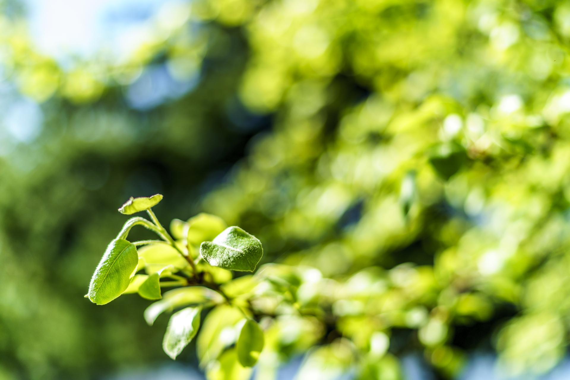 Zugerberg Frühlingsgrün
