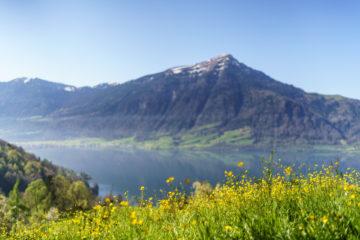 Frühlingswanderung am Zugersee - Kirschen und Kastanien