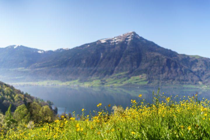 Frühlingswanderung am Zugersee – Kirschen und Kastanien