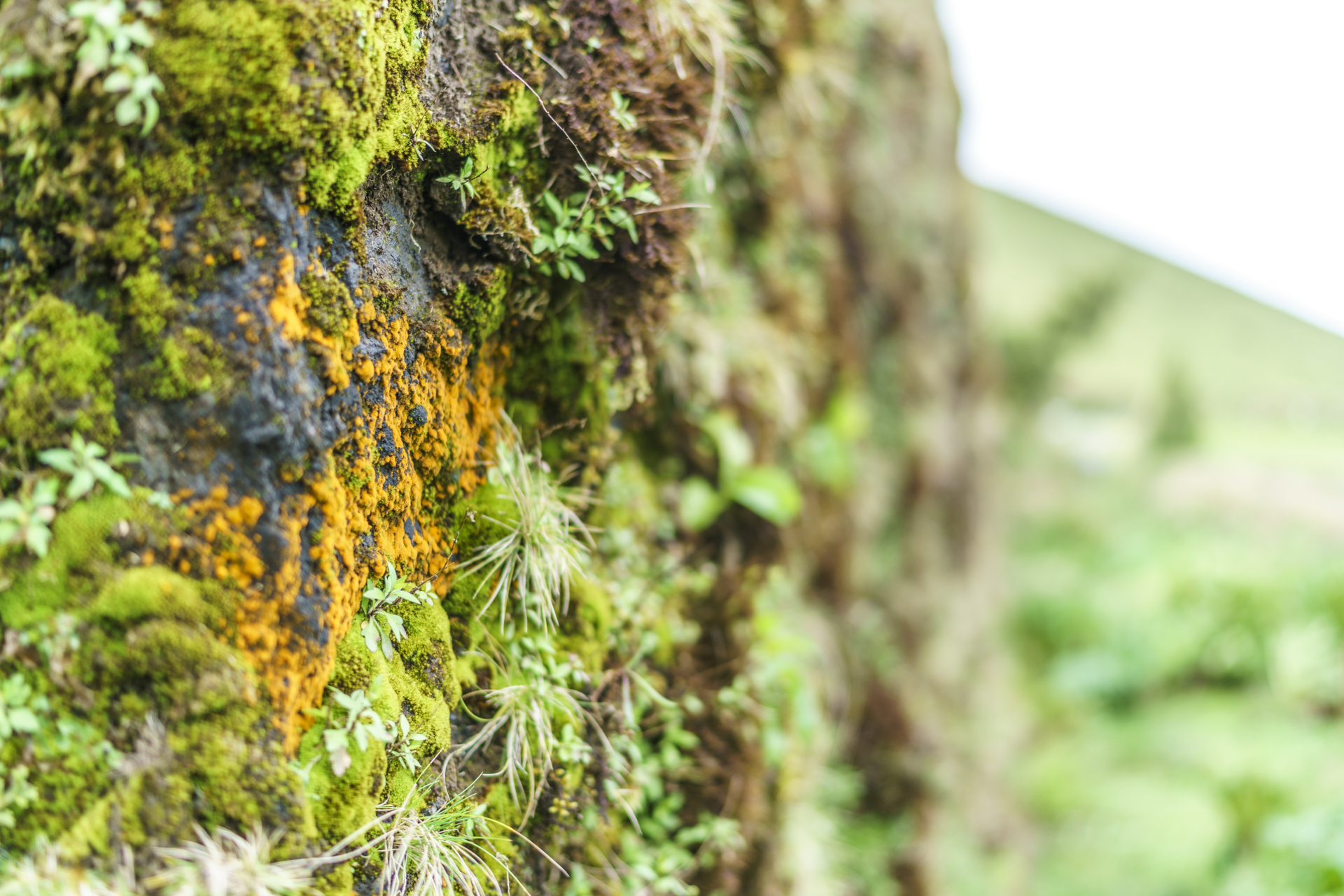 Sao Miguel grüne Azoreninsel