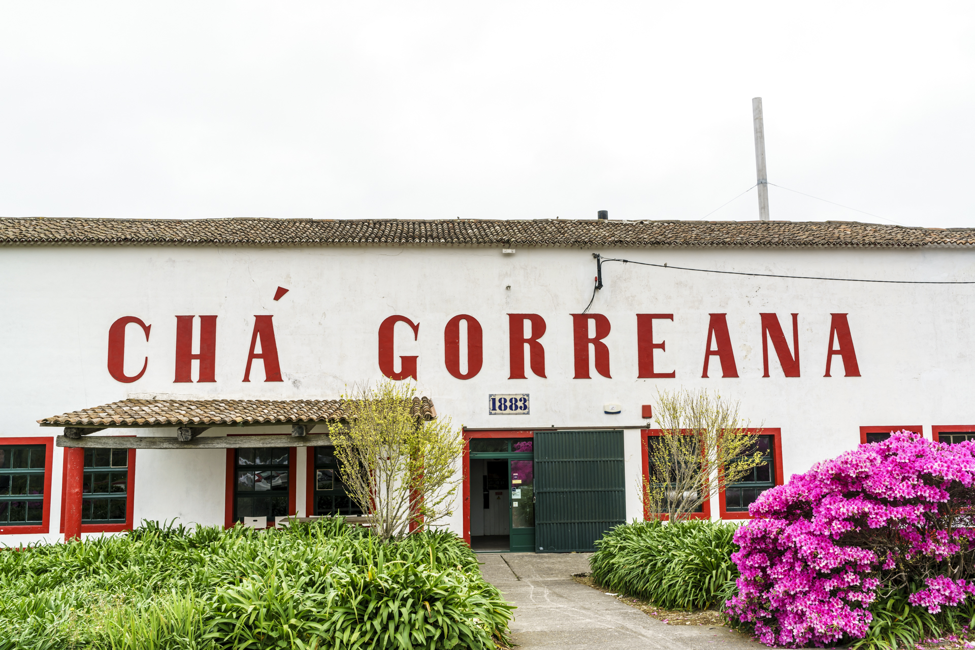 Cha Gorreana Teefarm