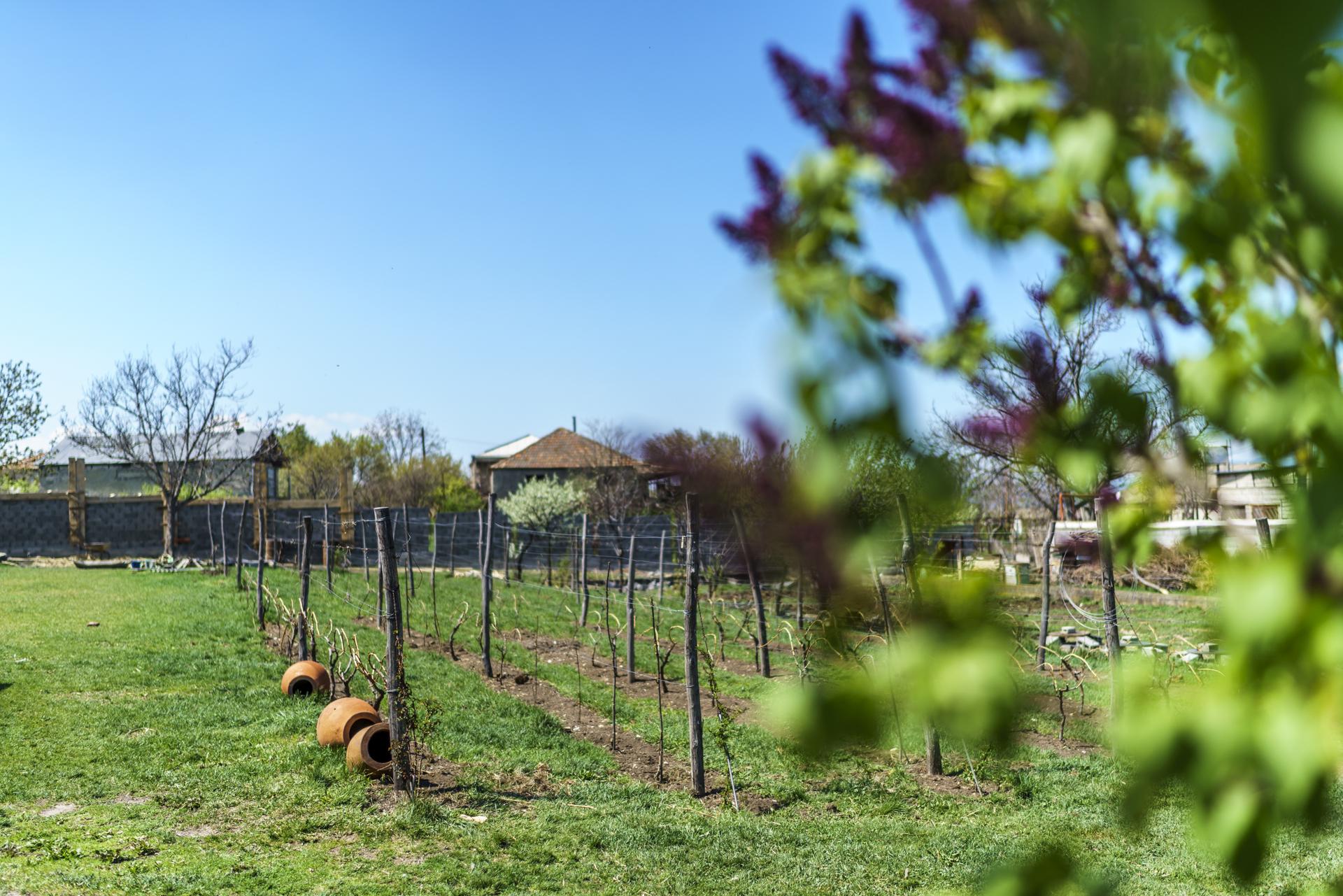 Georgien Iago's Wein