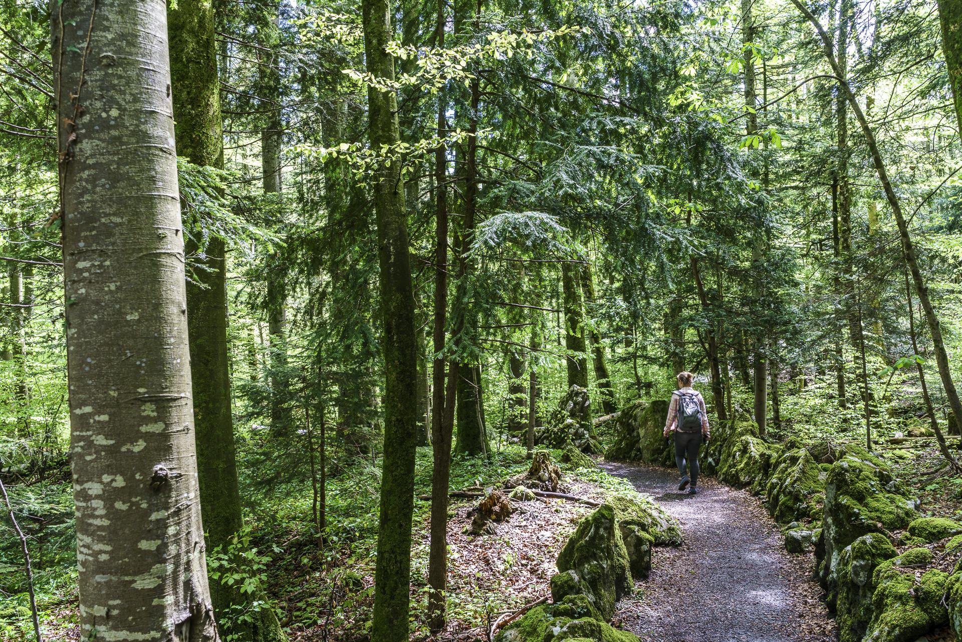 Wald Seelisberg