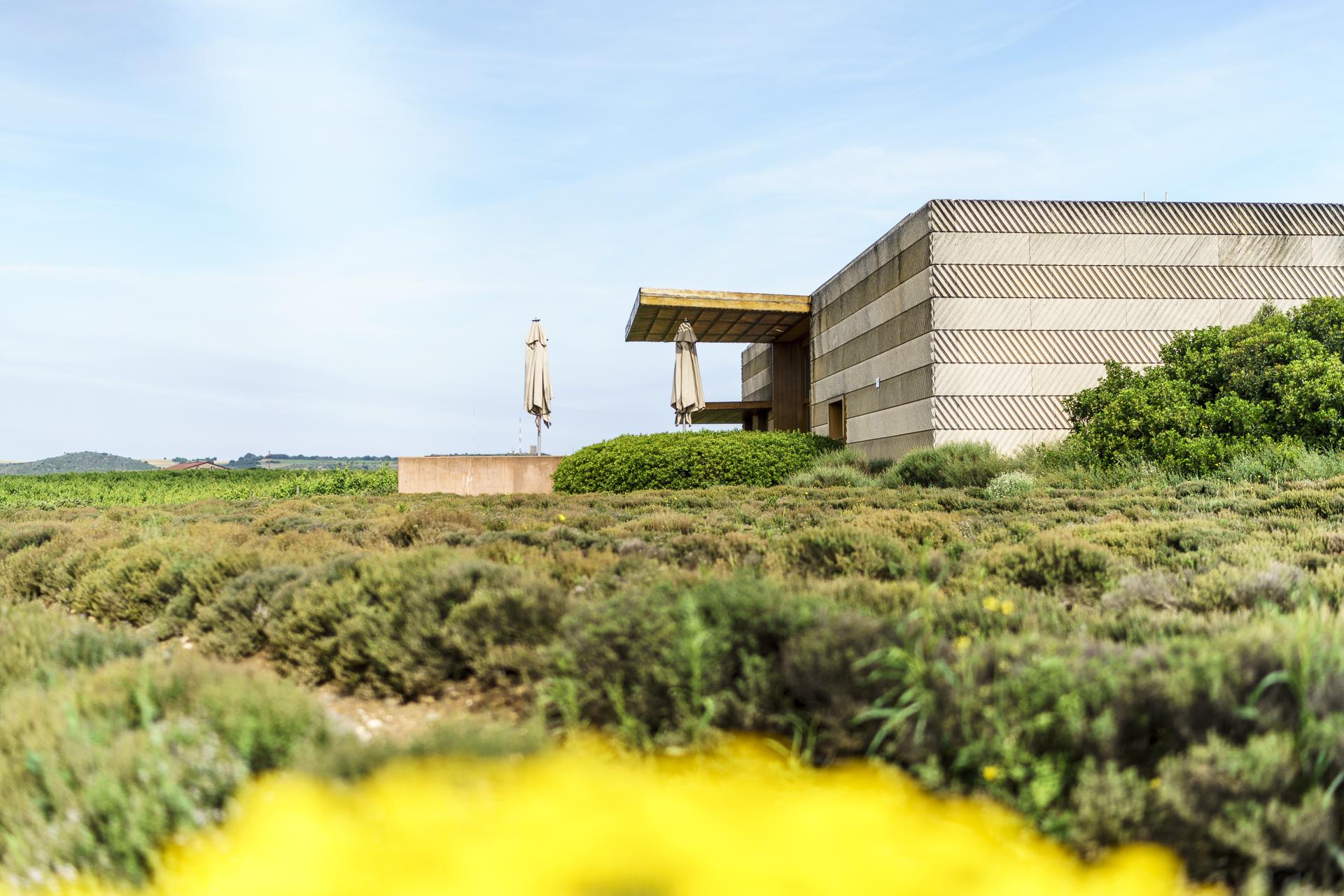 Bodega Alcorta Logrono Architektur