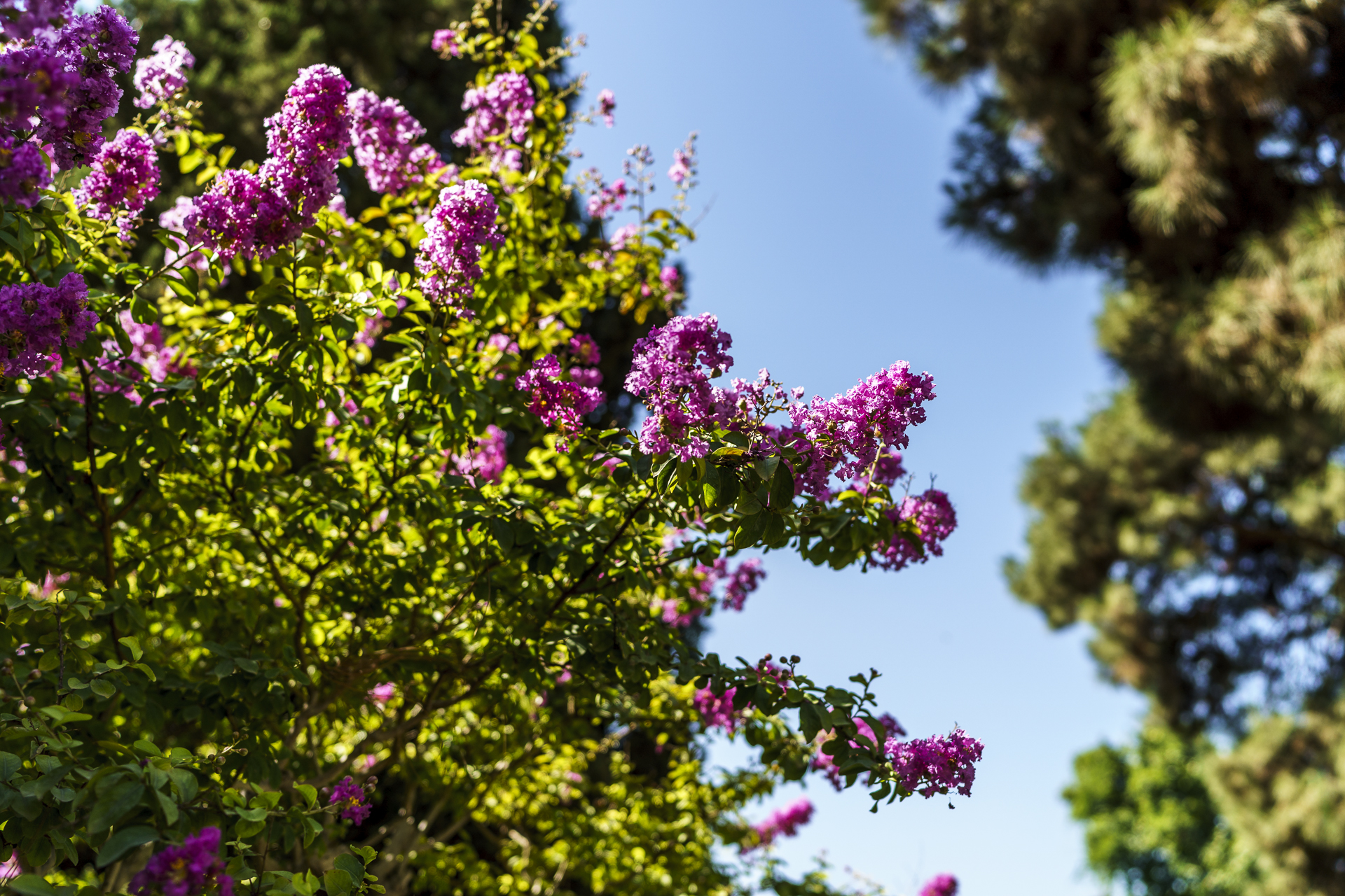 Golestanpalat Garten