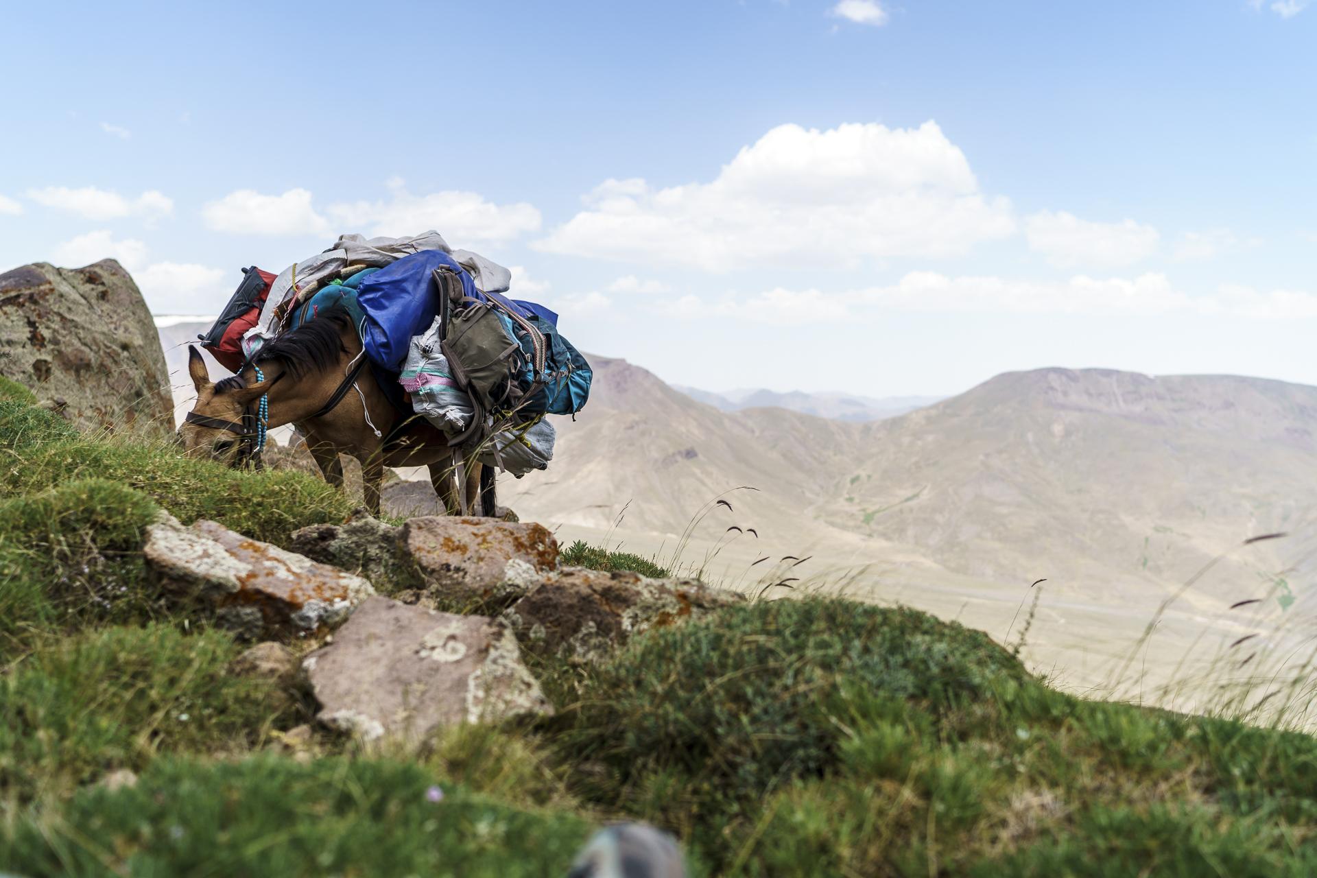 Packpferde Iran Trekking