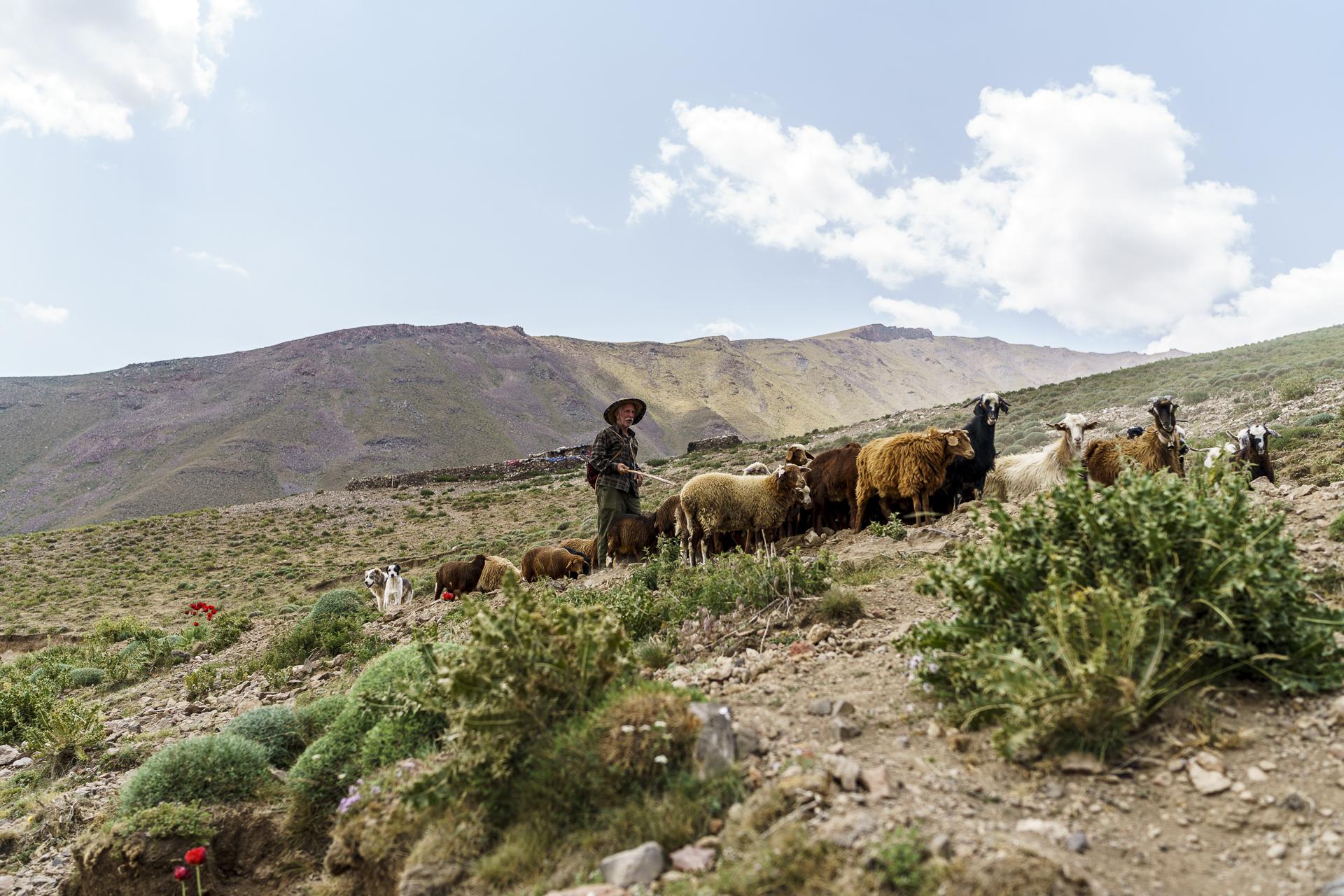 Schäfer mit Schafherde Nandal Iran