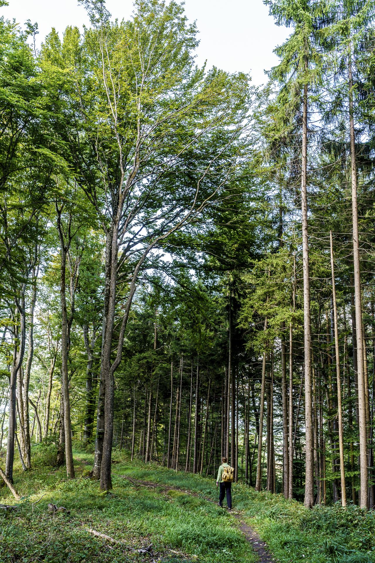 Durch den Wald wandern