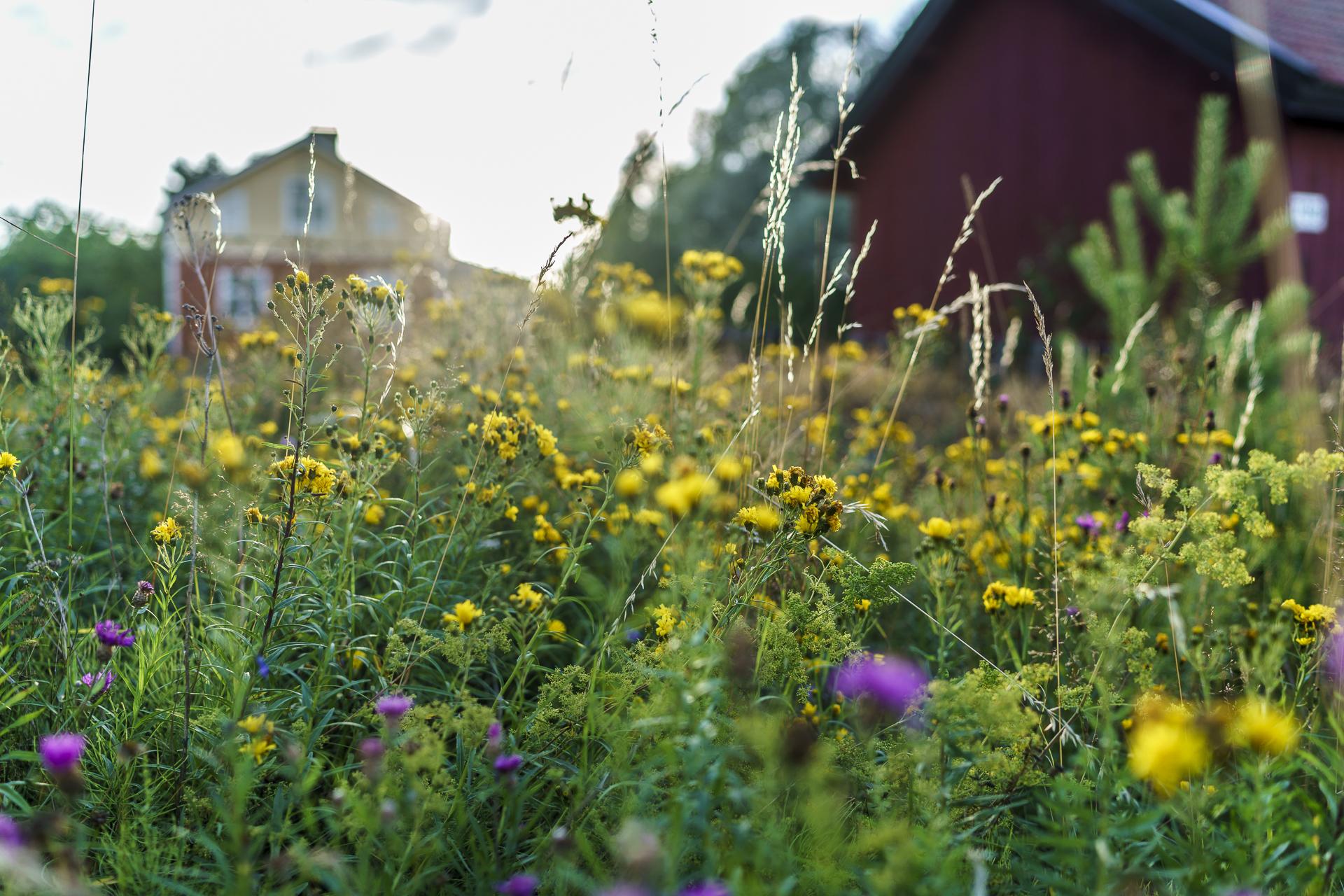 Finnland Korpo Sommer