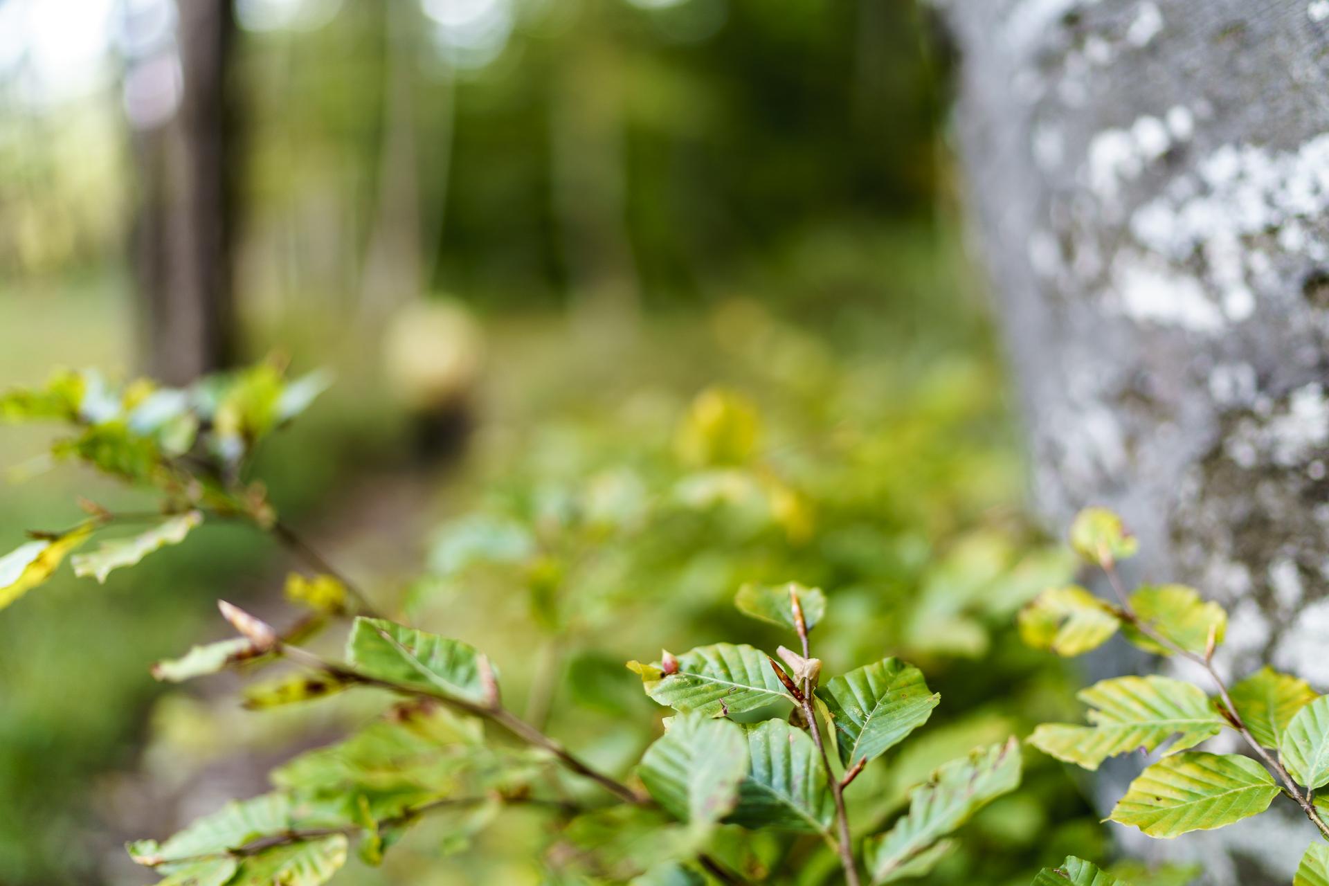 Makro Baumblätter