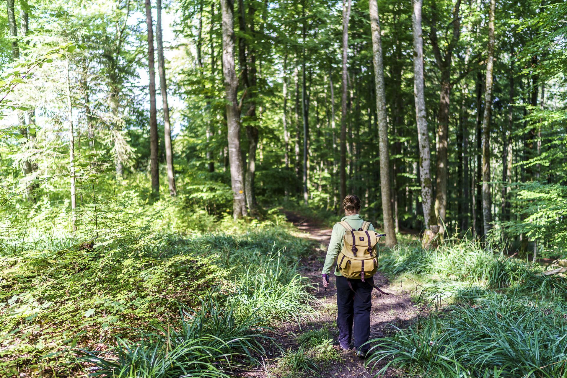 Randen Schaffhausen Wanderung