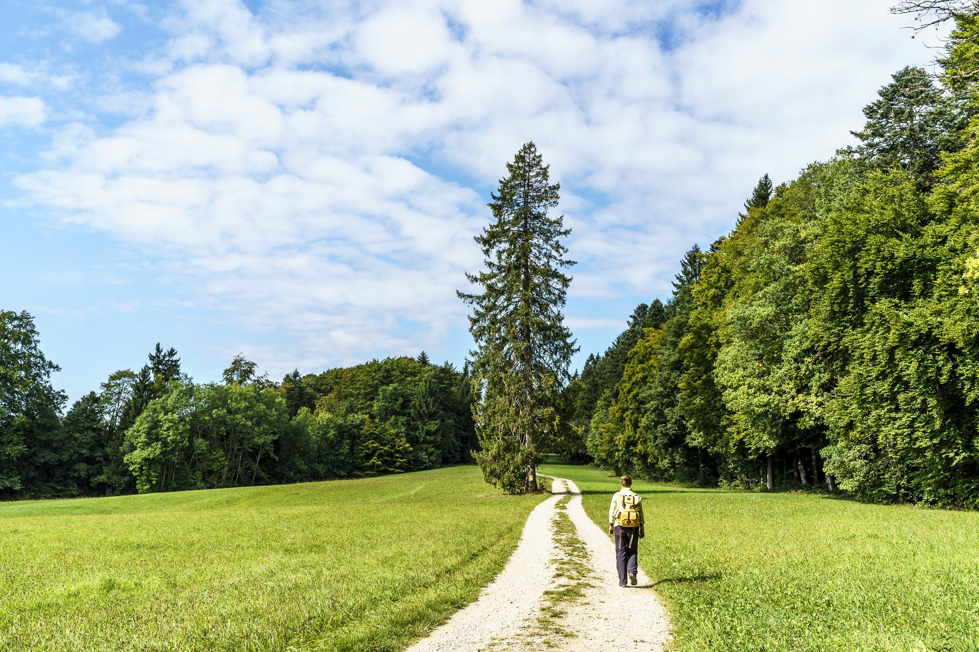 Schlossrande Regionaler Naturpark Schaffhausen