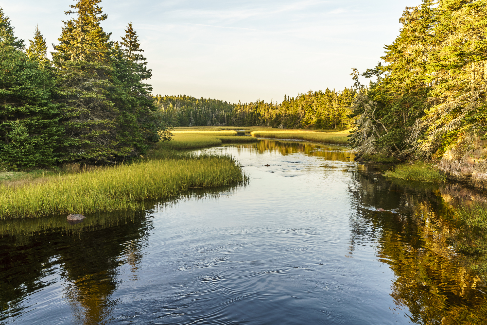 Cape Breton Natur