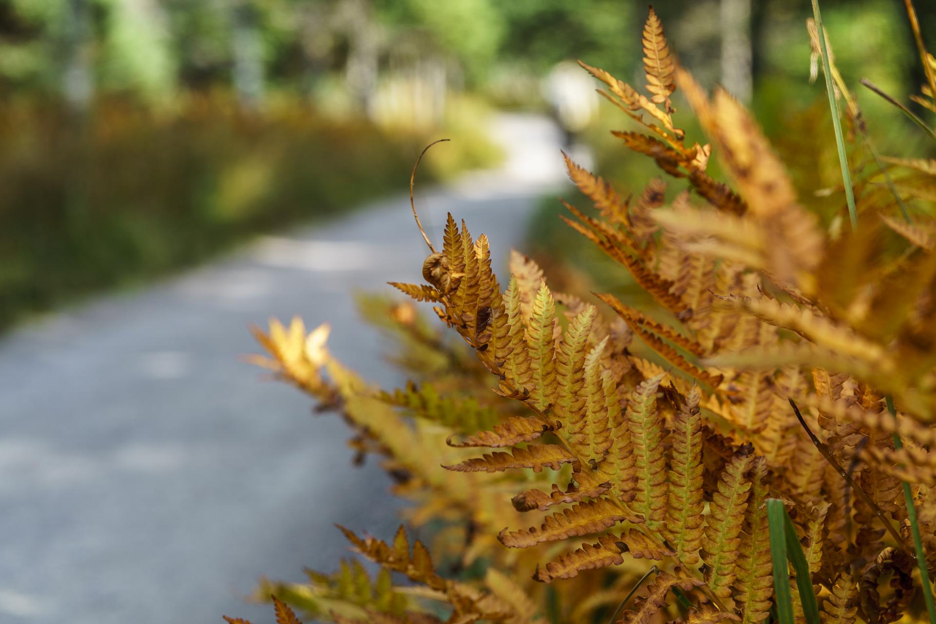 Herbstfarben Nova Scotia