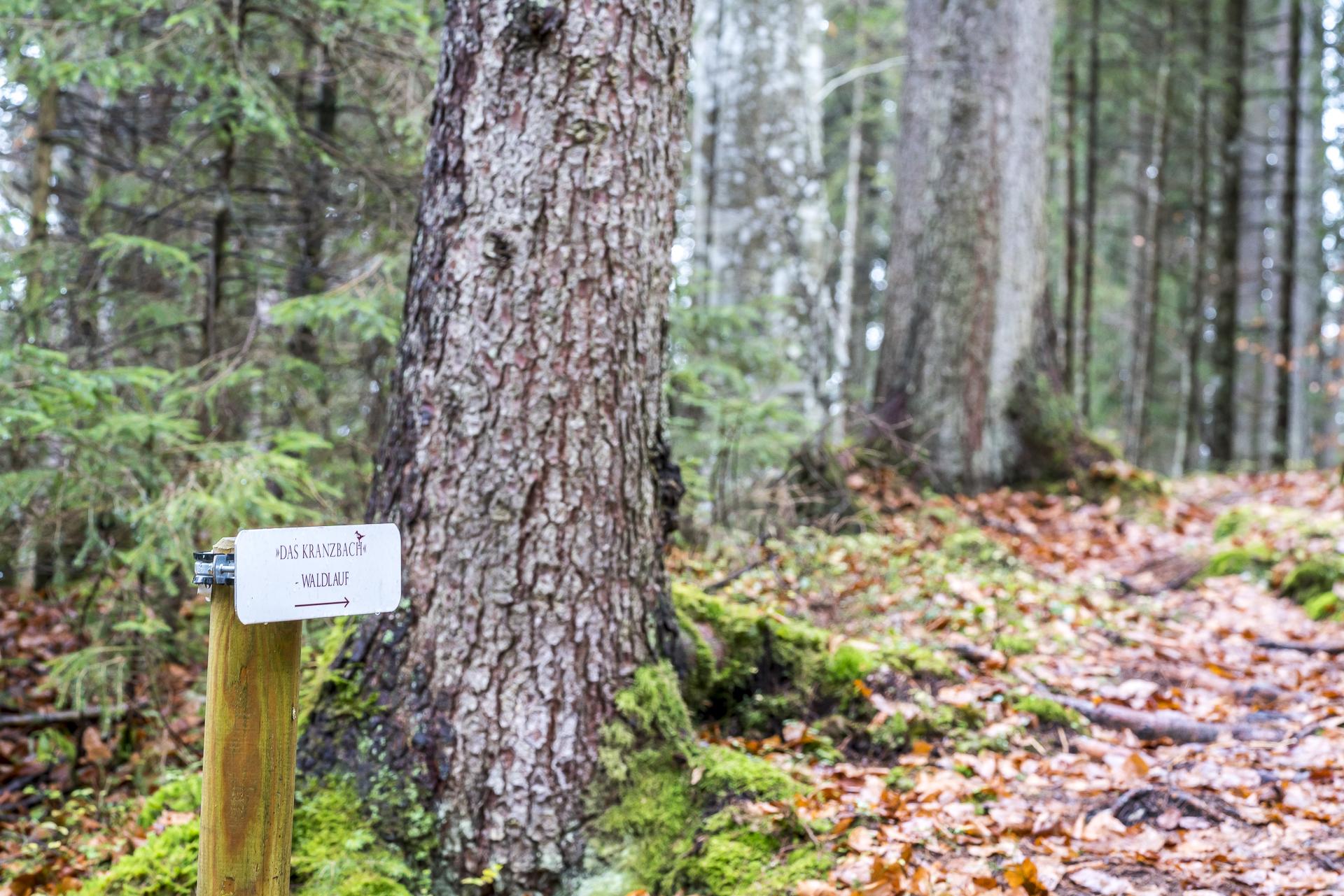 Der Kranzbach Waldlauf