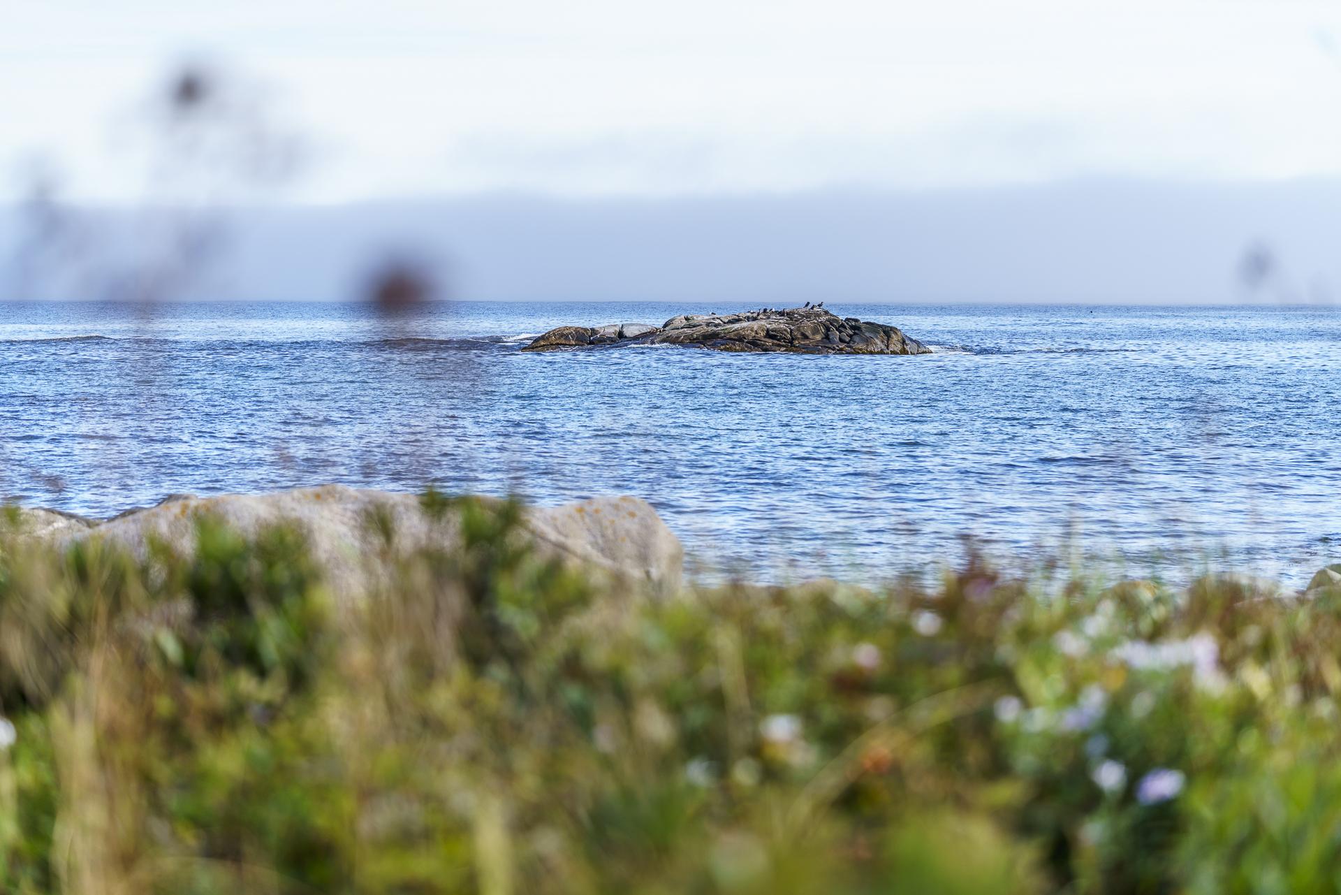 Kejimkujik National Park Seaside Seals