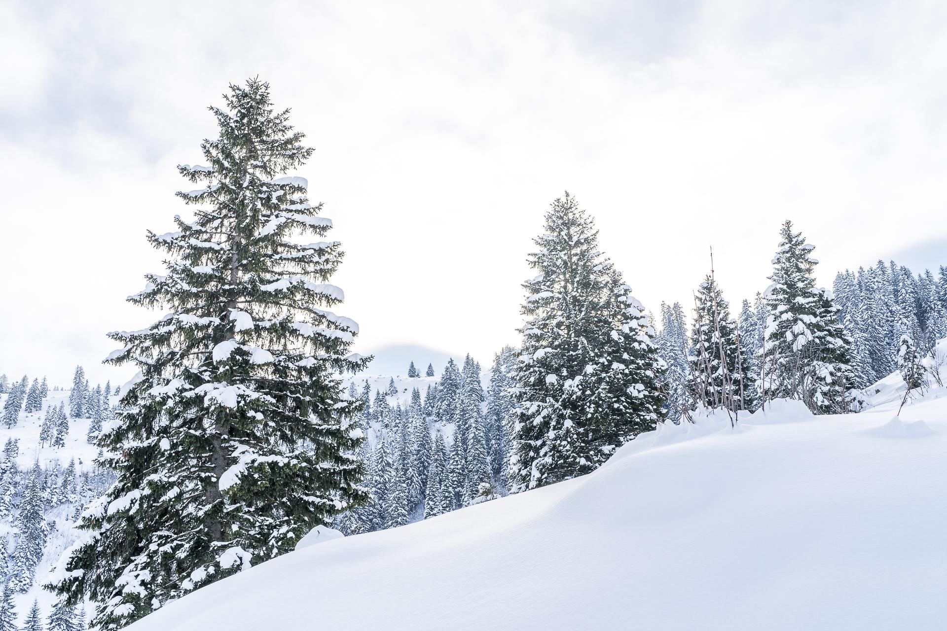 Stoos Winter
