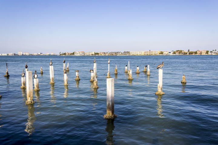 |Gastbeitrag| Tampa Bay: Mehr als Meer