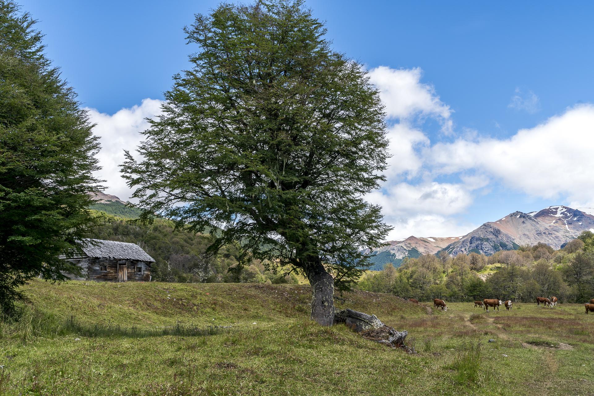 Alpweiden Patagonien