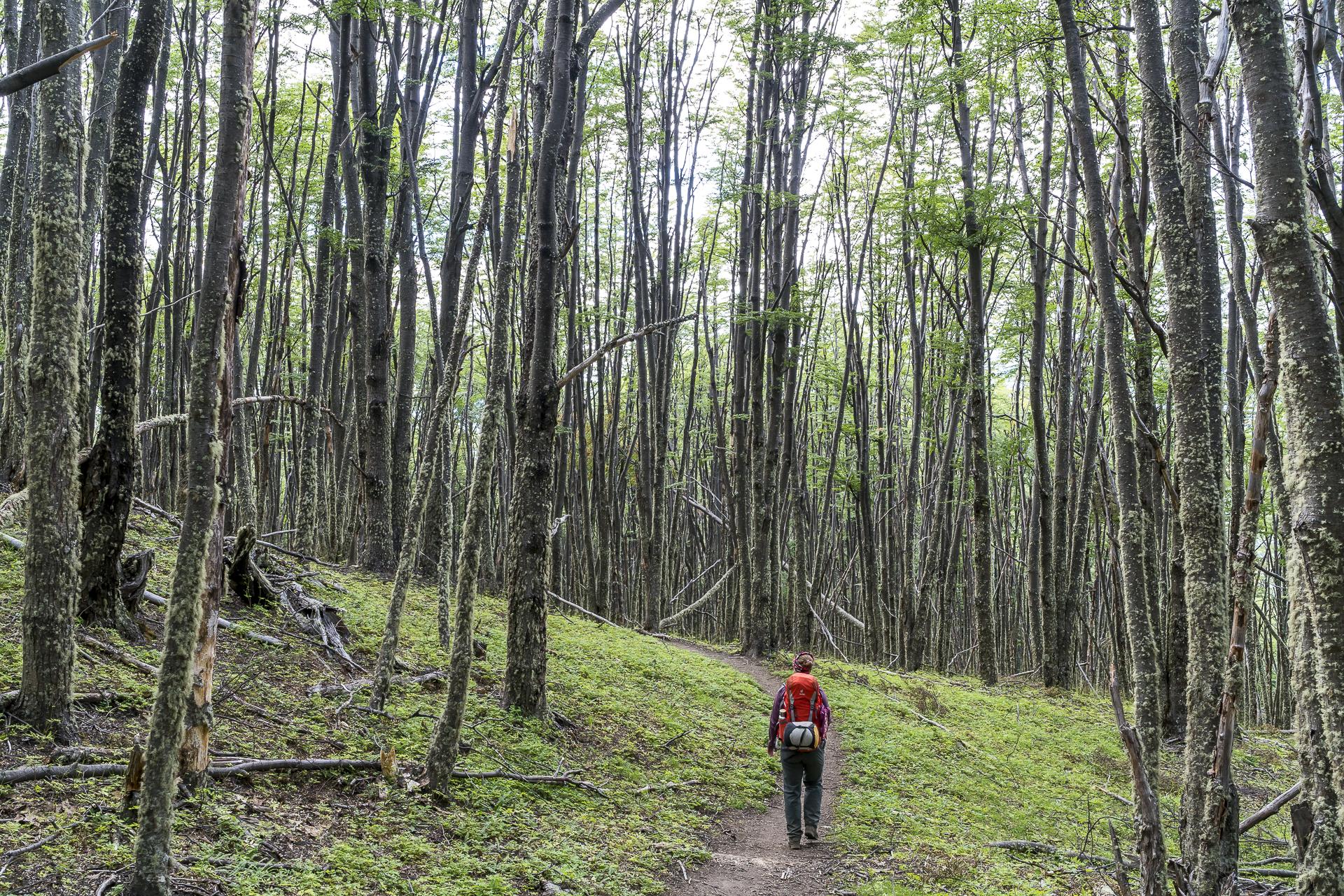 Cerro Castillo Trek Talabstieg