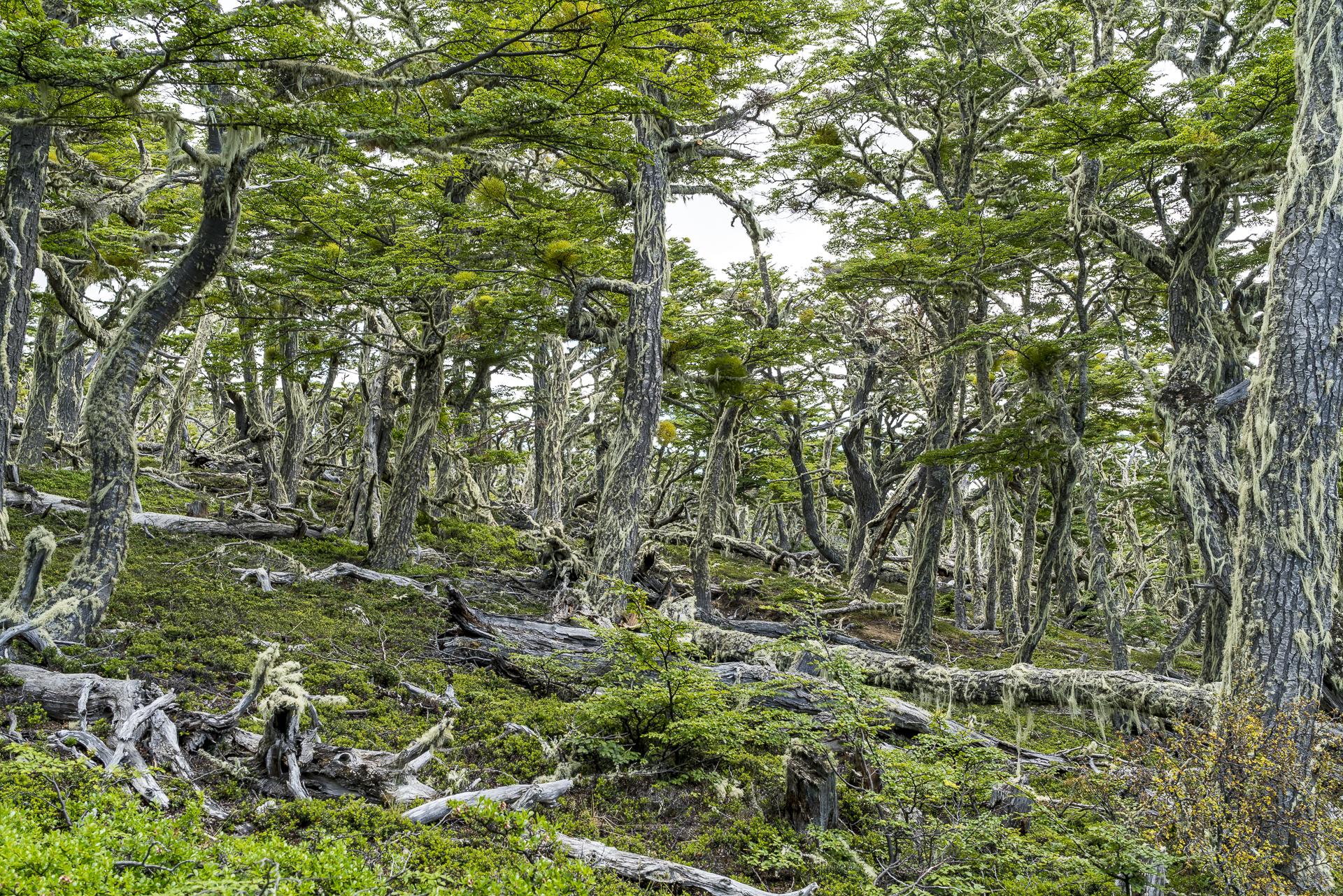 Puerto Natales Mirador Dorotea Wald