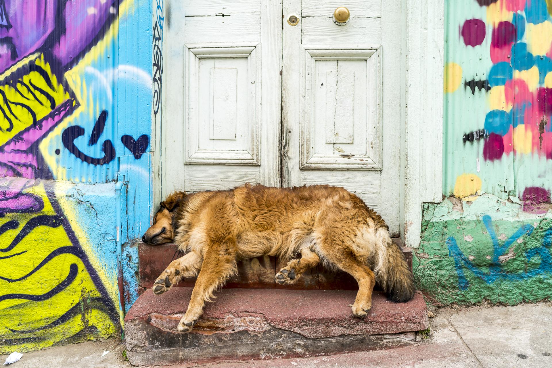 Valparaiso Strassenhunde