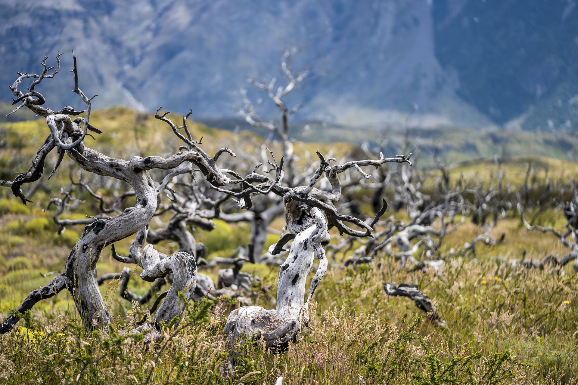 Waldbrandüberreste Torres del Paine