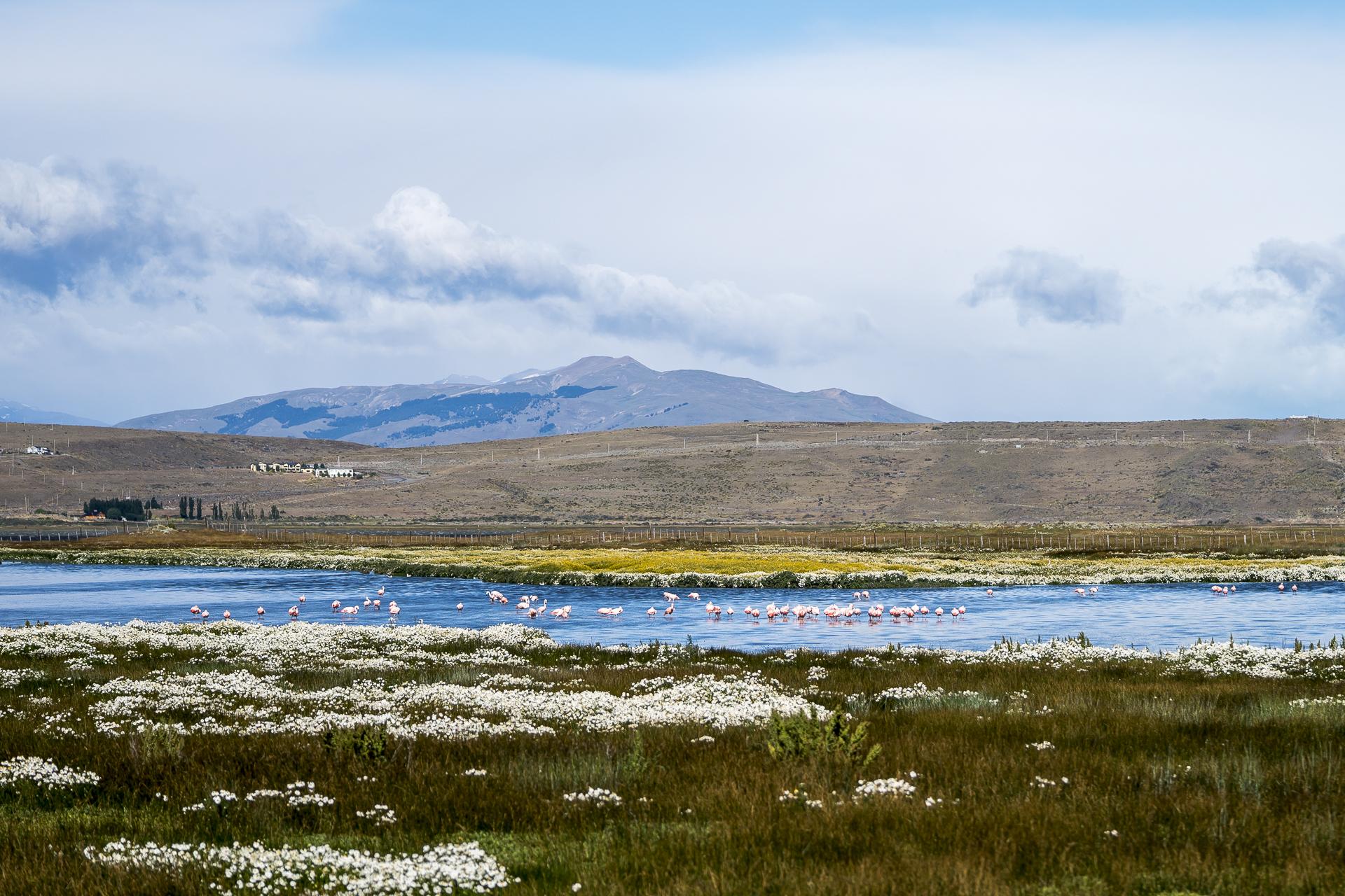 Lago Argentino Laguna Nimez Flamingos
