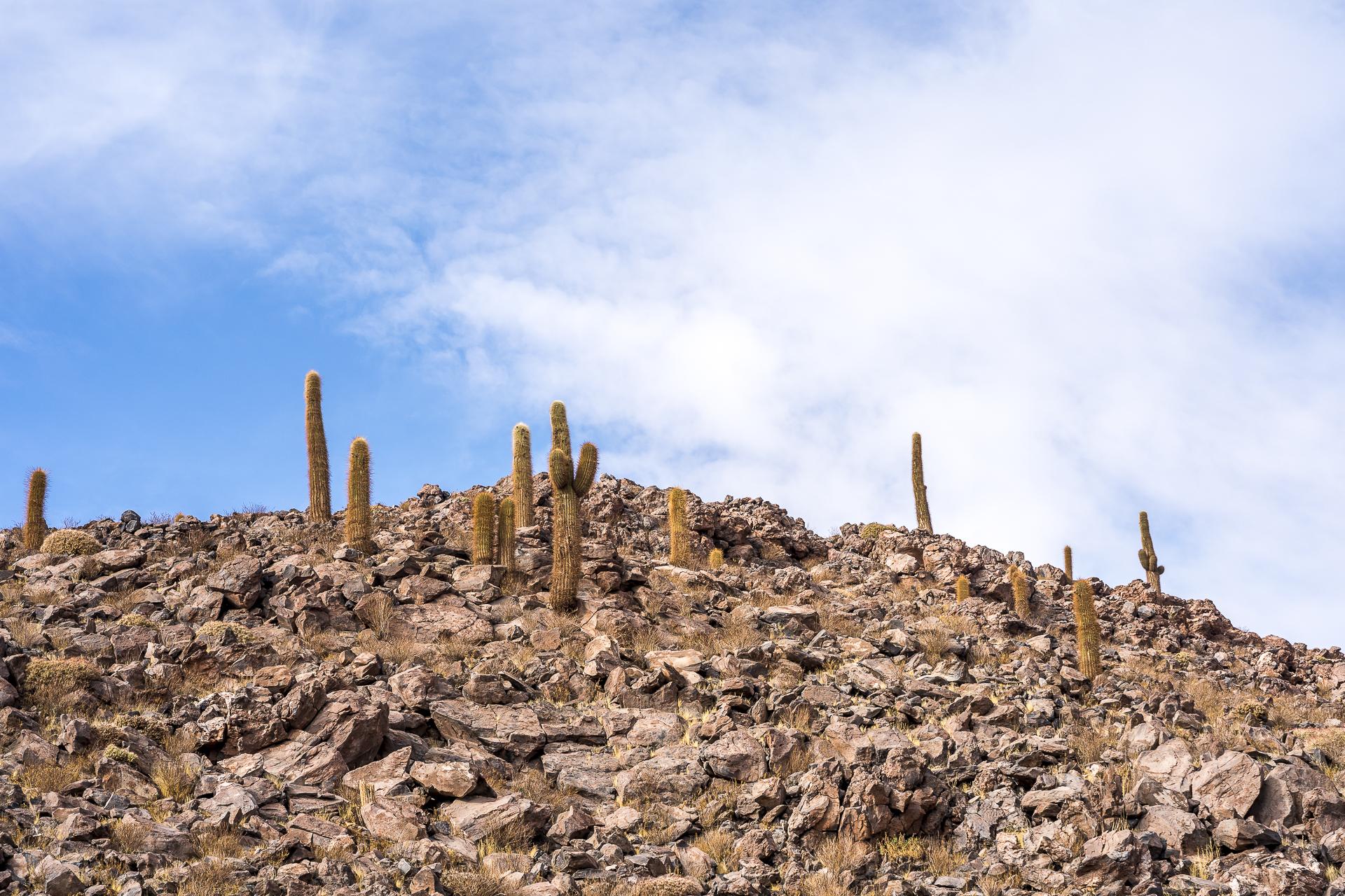Guatin Kaktus