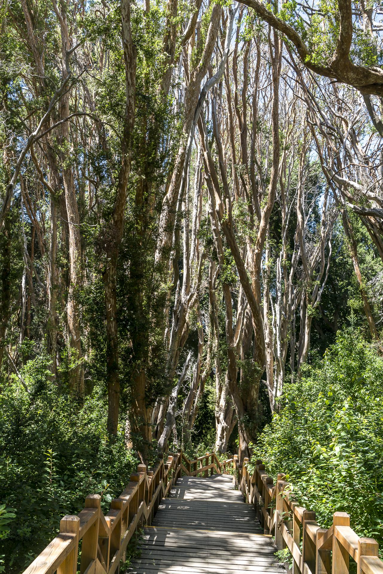 Nationalpark los Arrayanes schöne Bäume