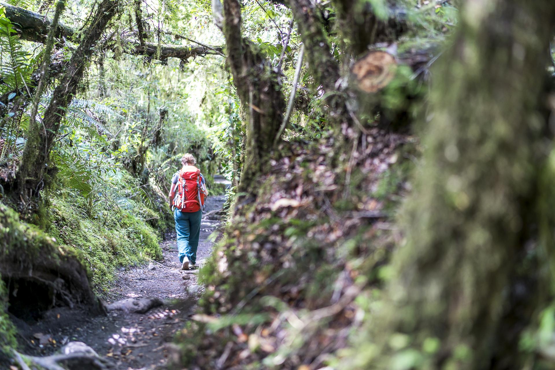 Wandern im Queulat Nationalpark