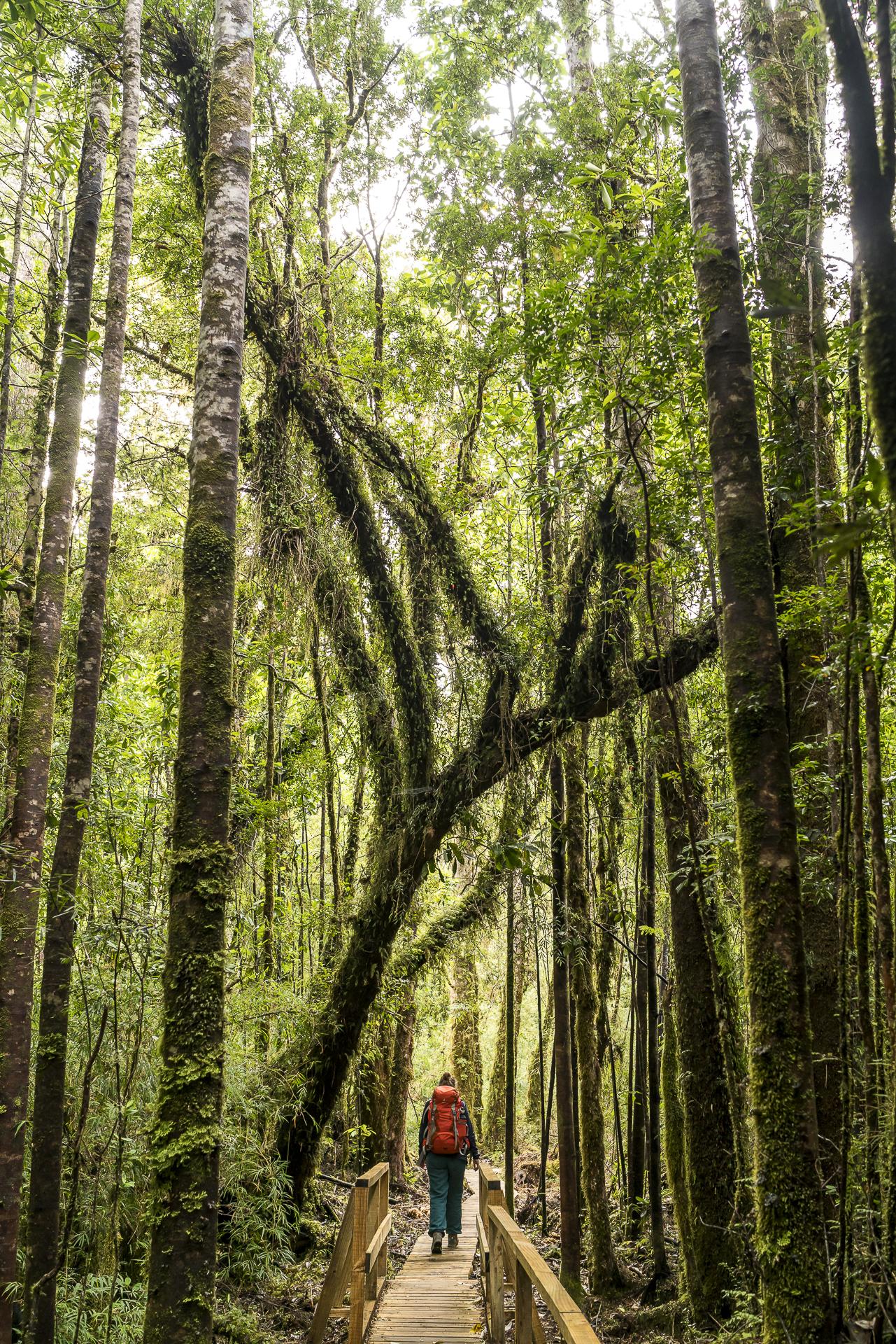 Wandern im Nationalpark Alerce Andino