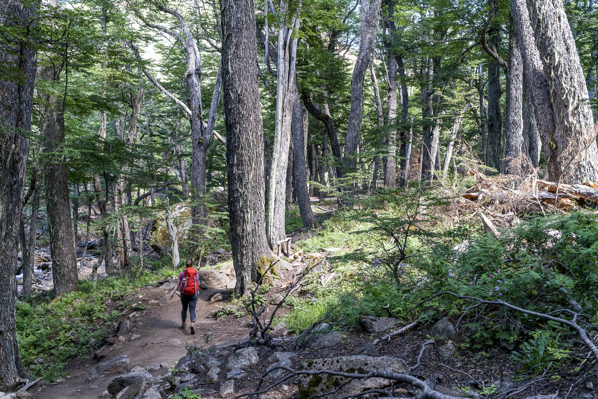 Trail Refugio Frey Bariloche