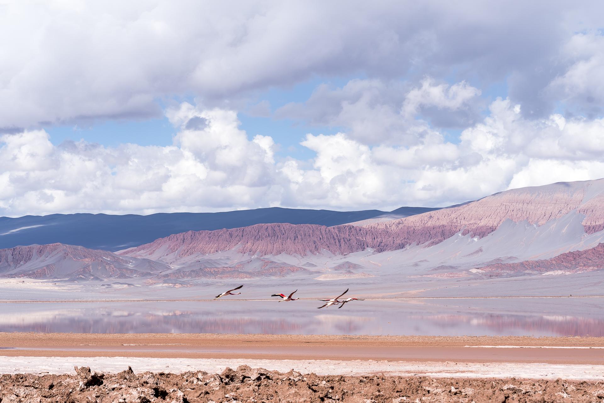 Flamingos el Penon