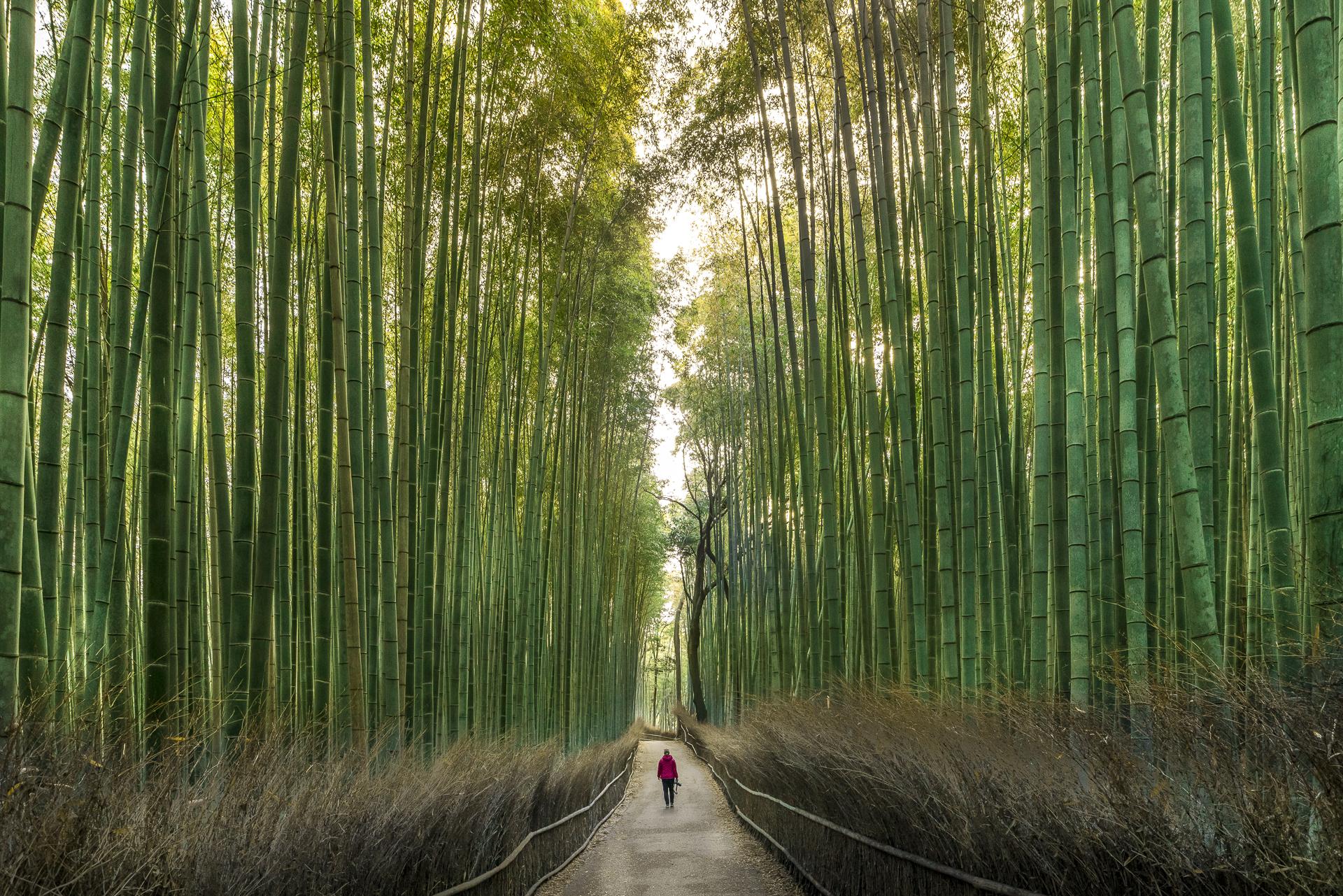 Arashiyama Bamboo Grove Fotospot Kyoto