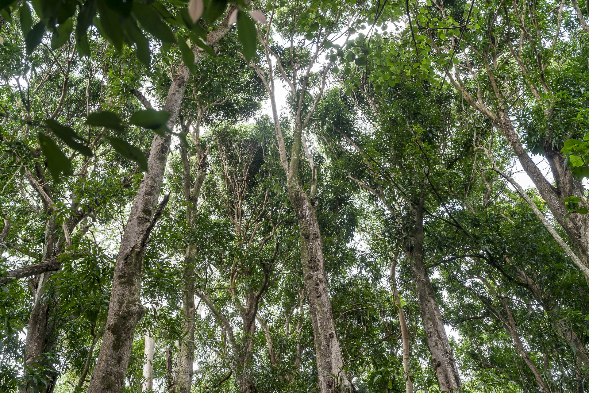 Kauai Tropical Forest