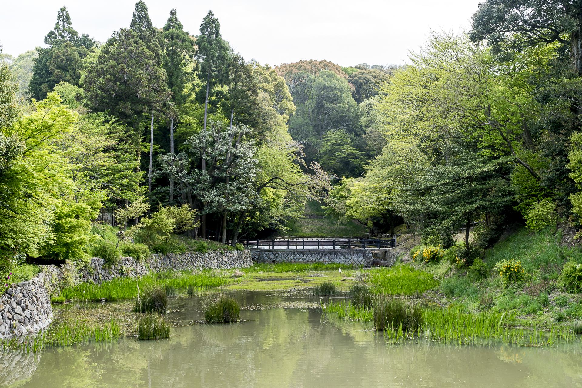 Park in Kyoto Japan