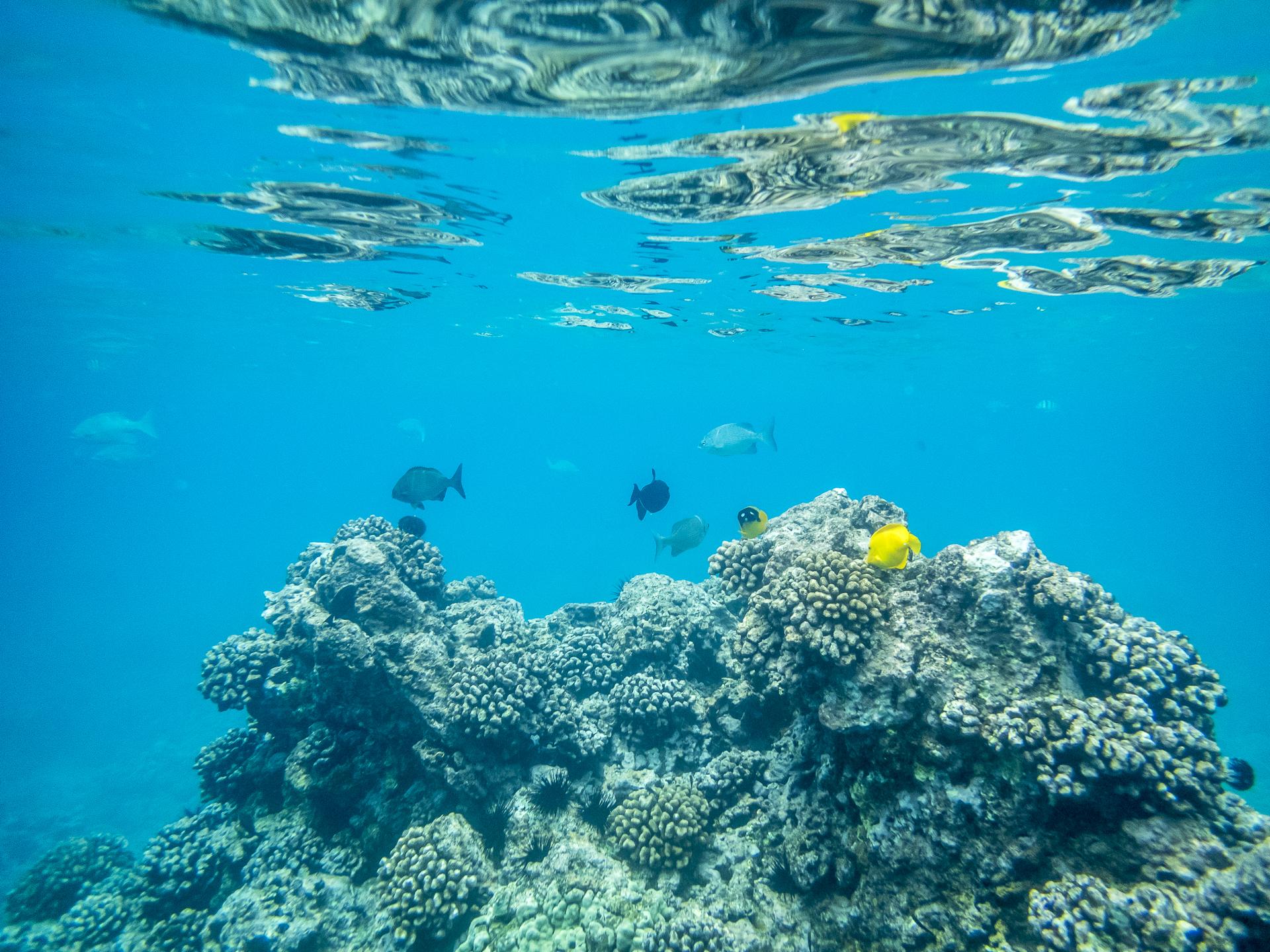 Maui Schnorcheln Süden