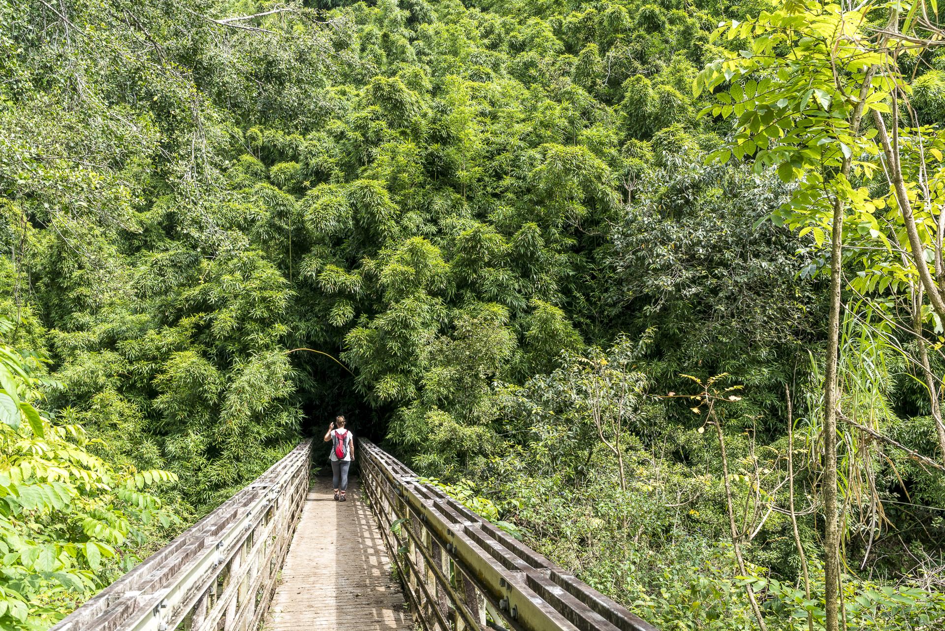 Maui Pipiwai Trail