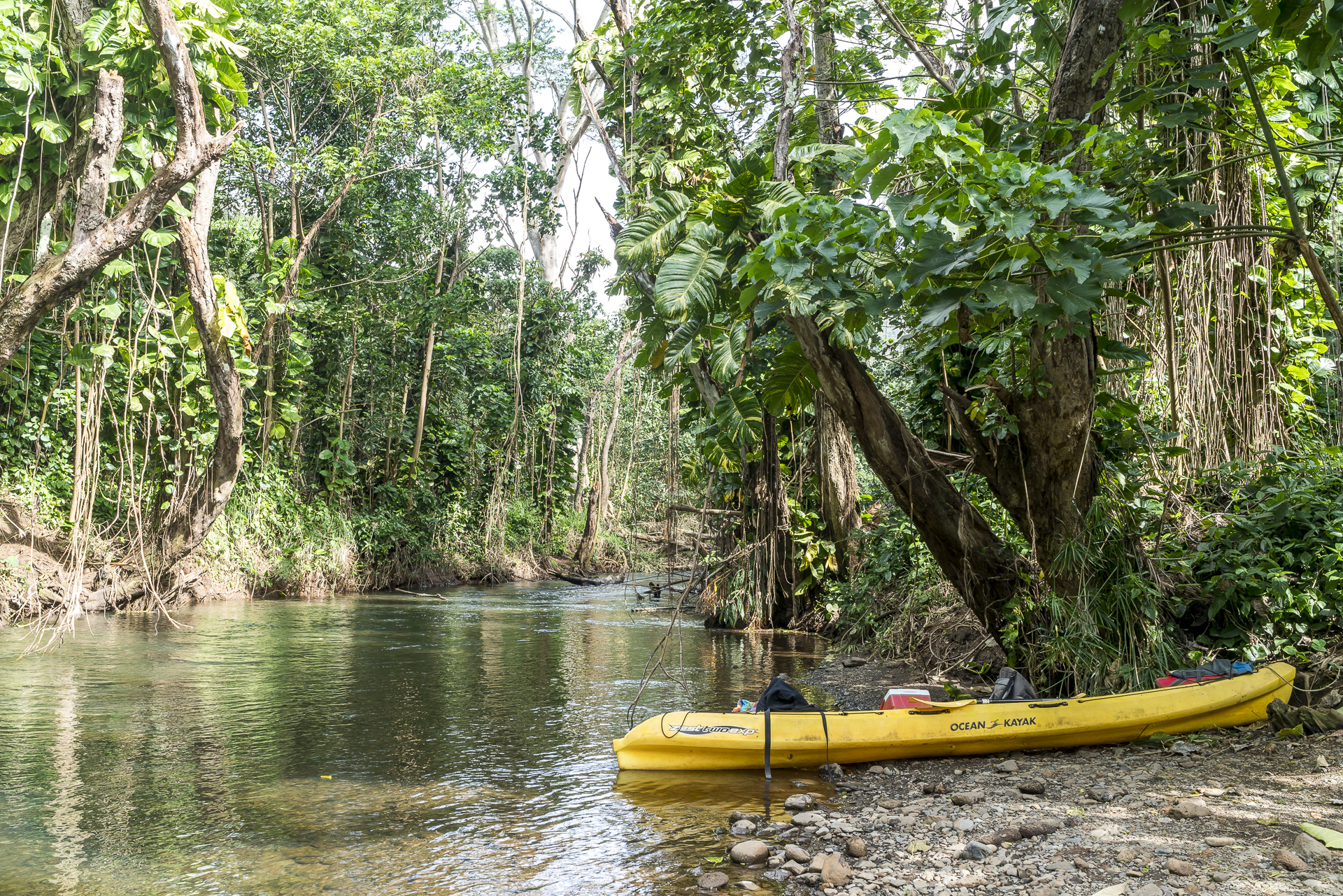 Wailua River kayaken