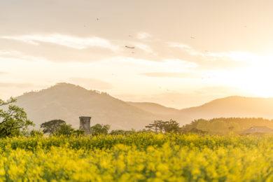 Cheomseongdae Observatorium Südkorea Reisetipps