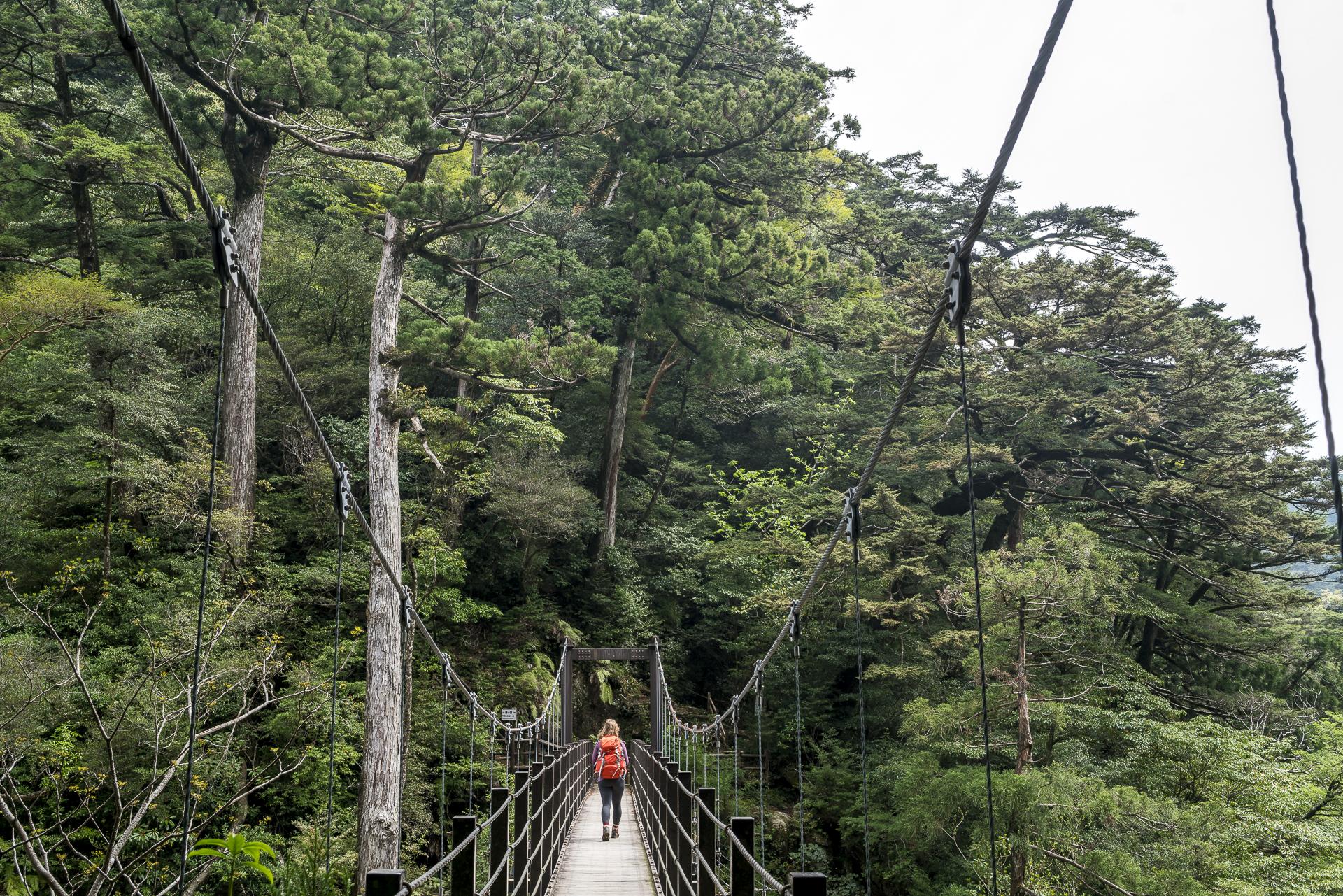 Kohana Hiking Trail Yakushima