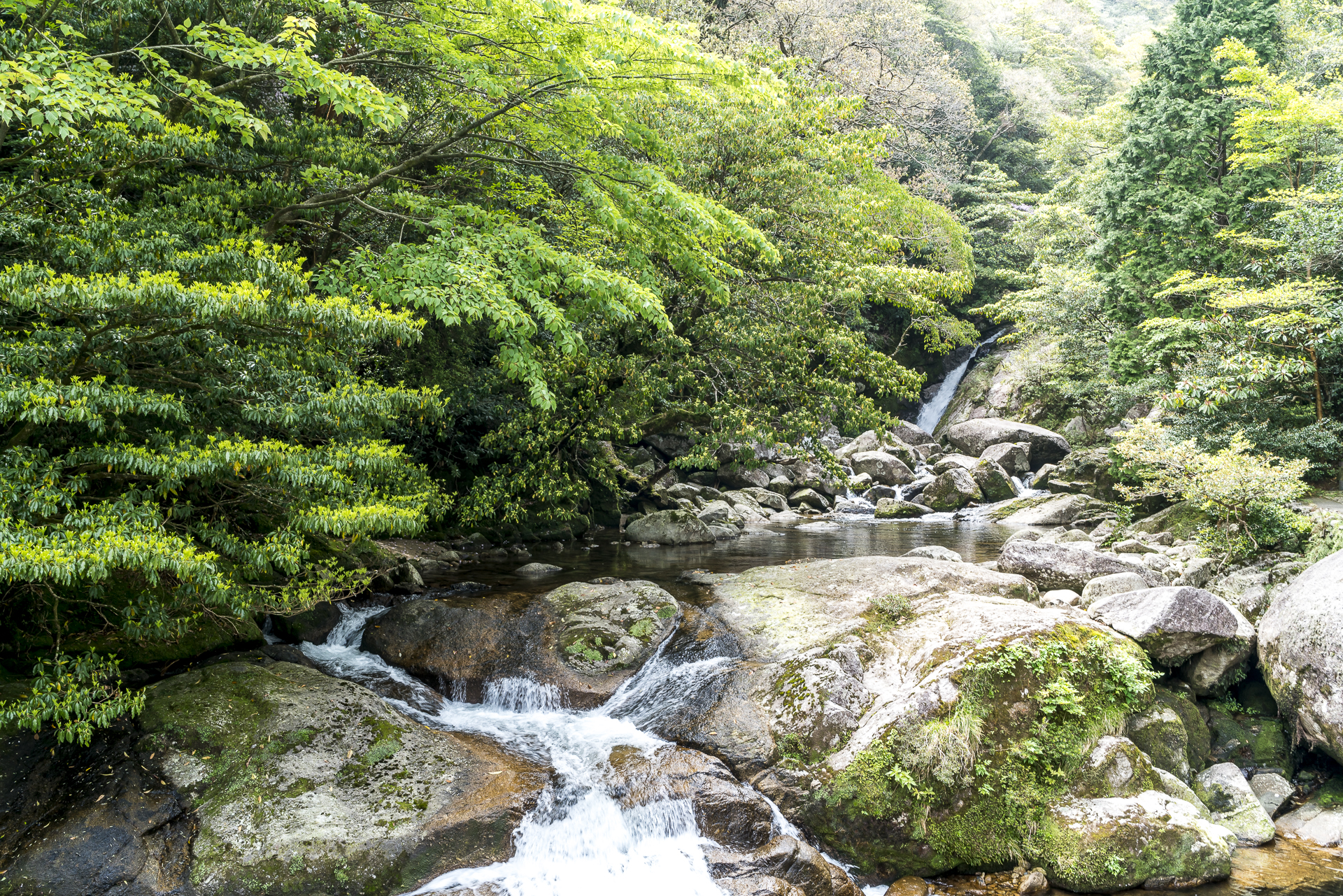 Shiratani Unsuikyo Ravine Yakushima