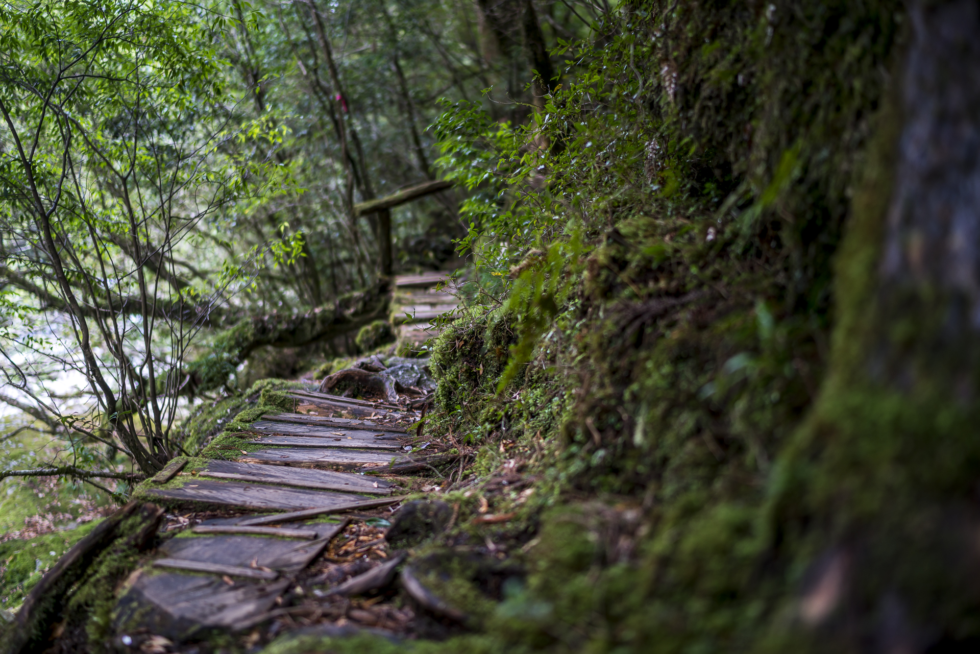 Tokimekinomichi Trail Yakushima