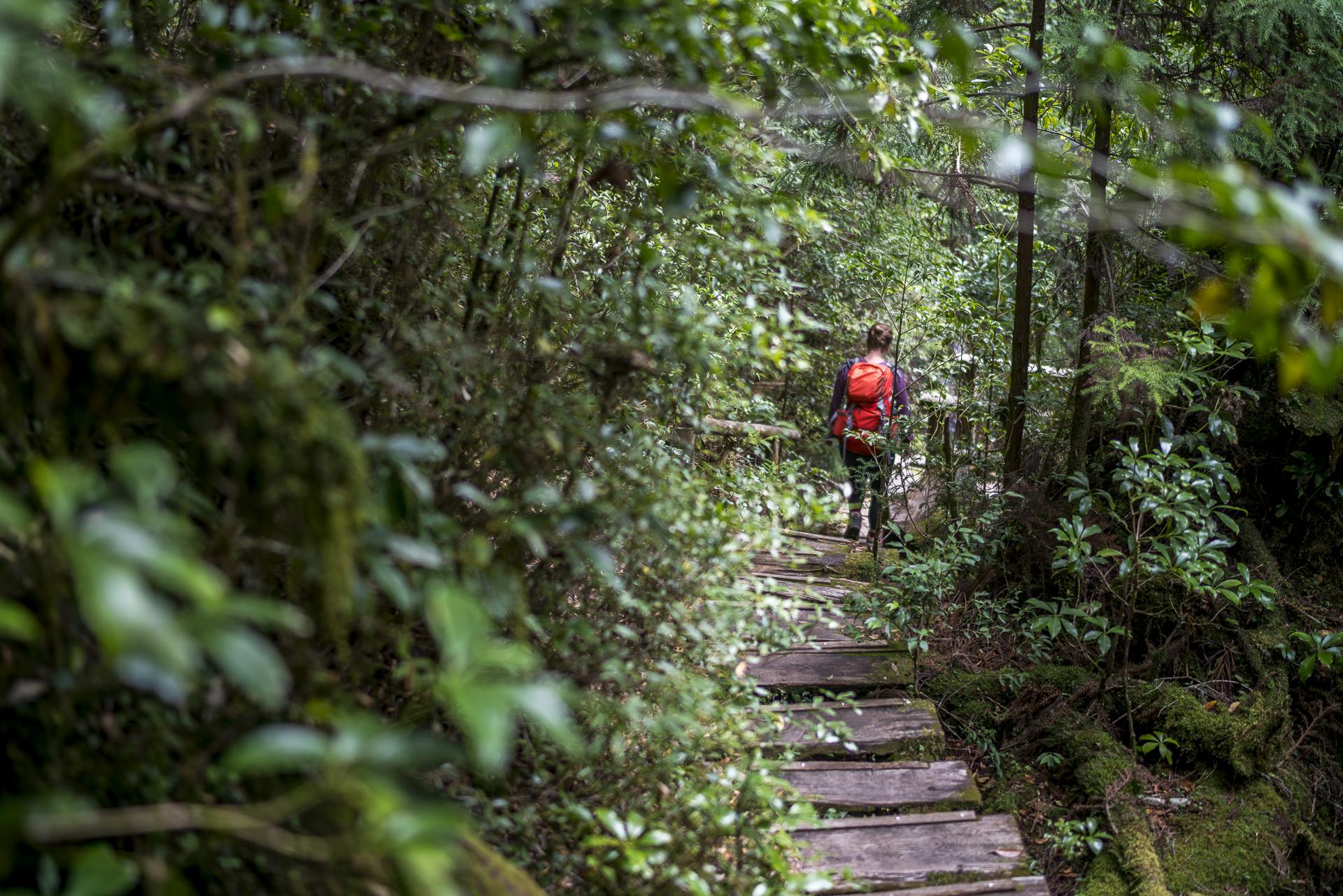 Wandern auf Yakushima